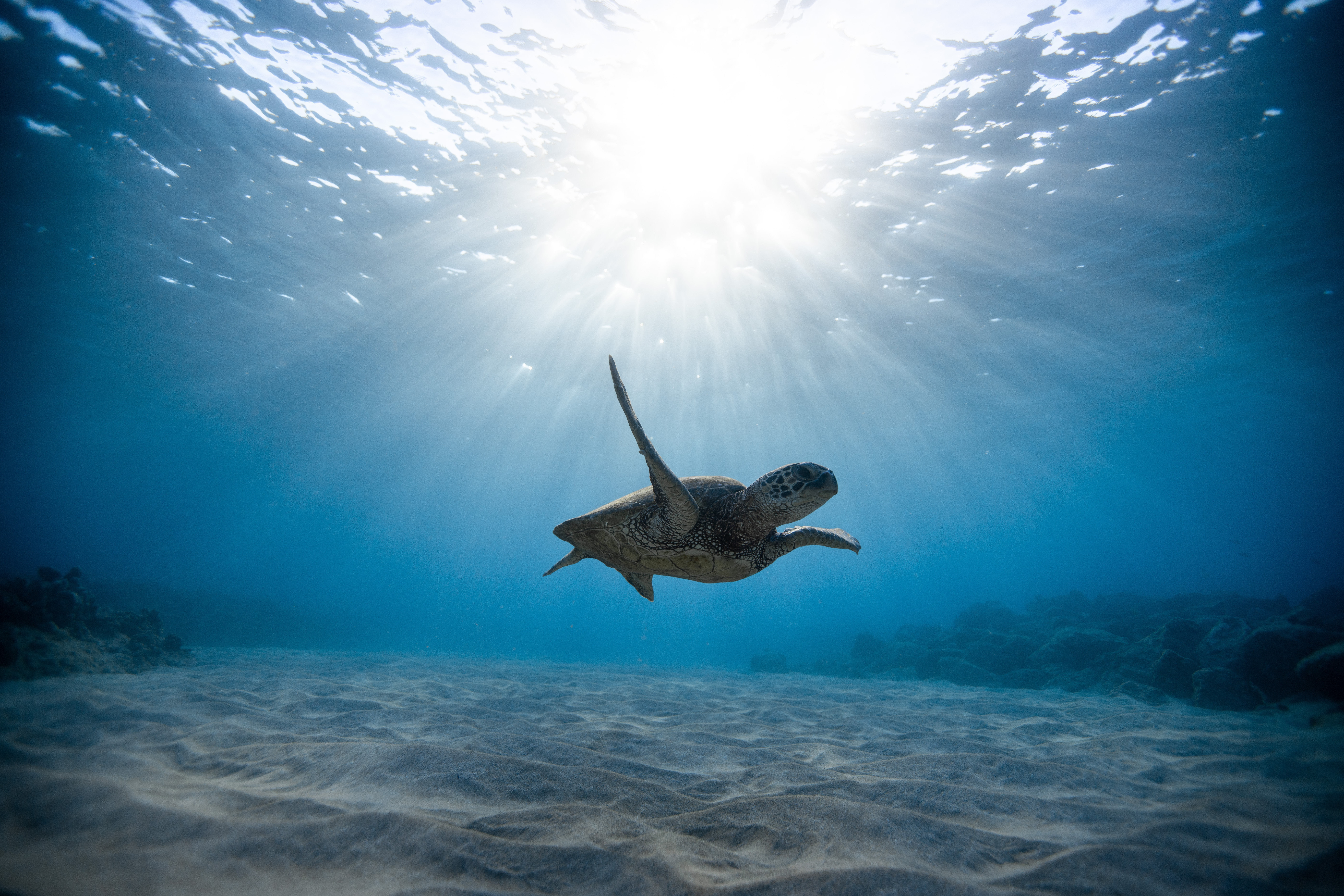 140455 Hintergrundbild herunterladen Tiere, Schwimmen, Ozean, Unterwasserwelt, Schädel, Meeresschildkröte - Bildschirmschoner und Bilder kostenlos
