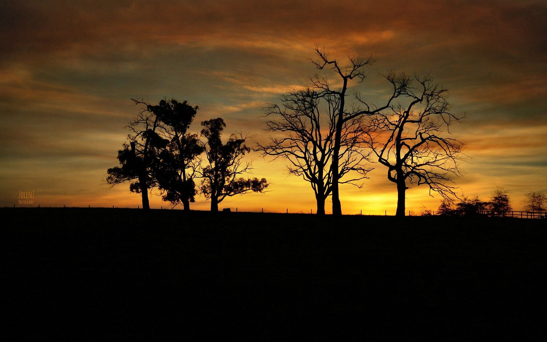 99804 скачать обои Фон, Деревья, Темные, Темный, Тень - заставки и картинки бесплатно