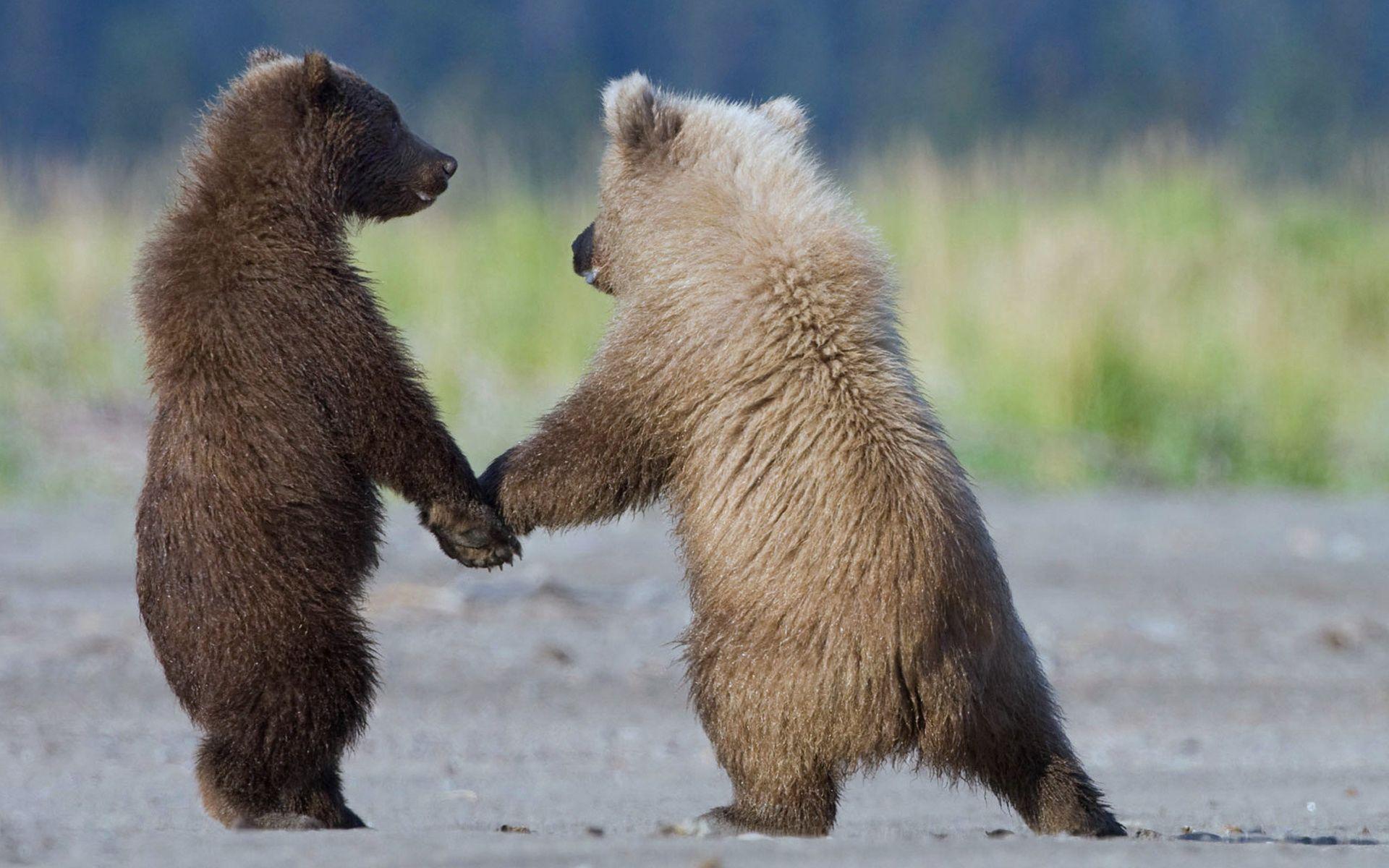 124844 Заставки и Обои Медведи на телефон. Скачать Животные, Медведи, Пара, Прогулка, Детеныши картинки бесплатно