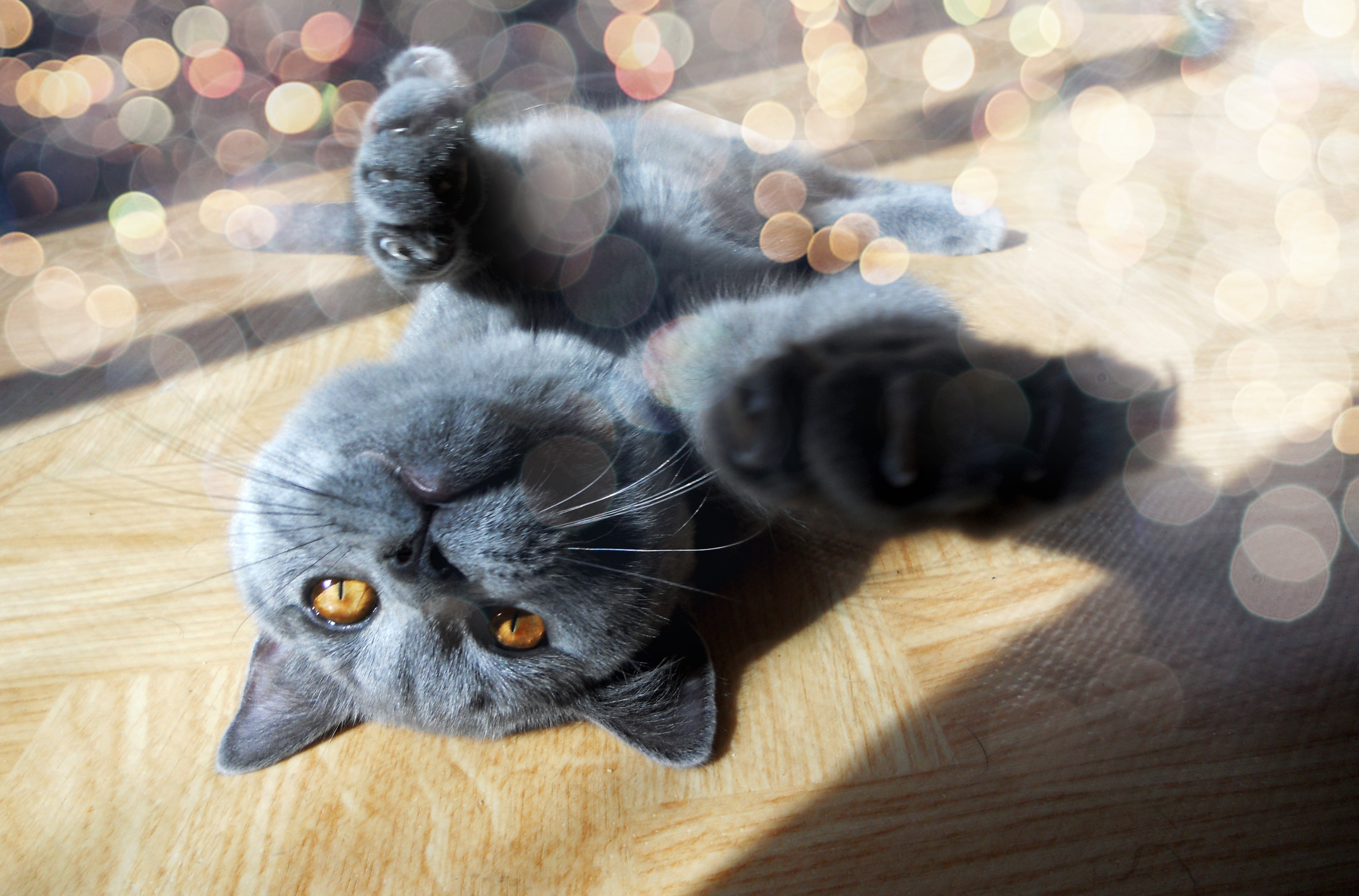 147307 download wallpaper Animals, Cat, Muzzle, Paw, Playful, Shine, Light, Glare screensavers and pictures for free