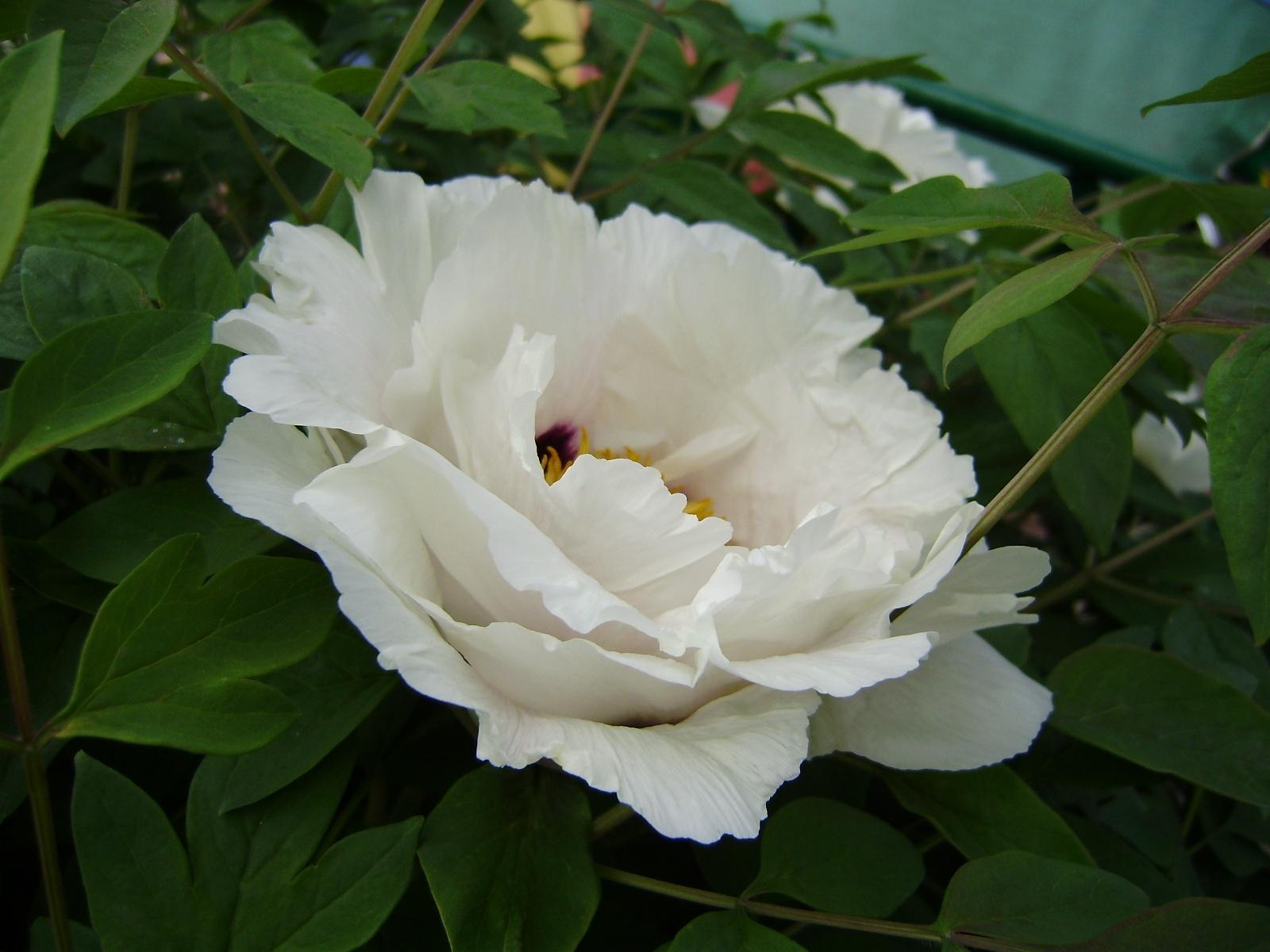 4775 скачать обои Растения, Цветы - заставки и картинки бесплатно