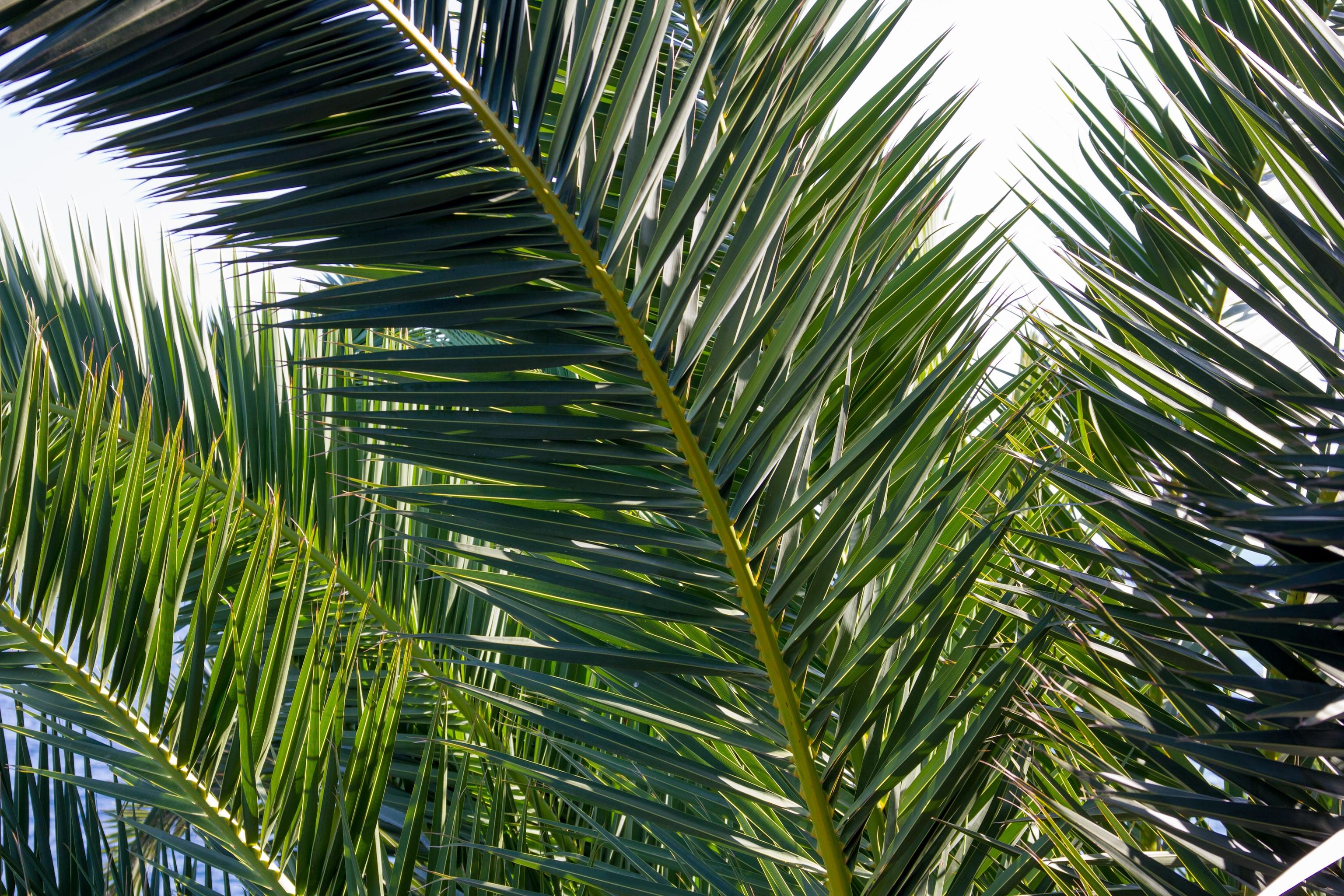 101460 скачать обои Ветки, Природа, Растение, Пальма - заставки и картинки бесплатно