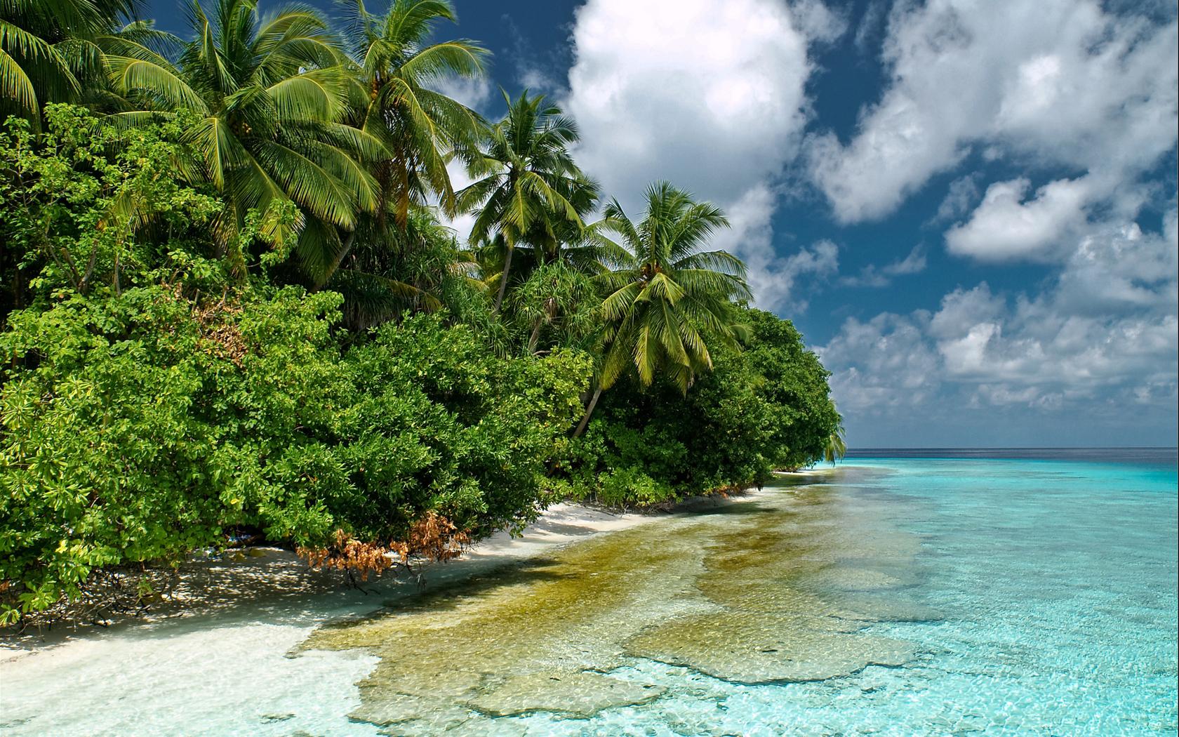 28940 скачать обои Пейзаж, Море, Пальмы - заставки и картинки бесплатно