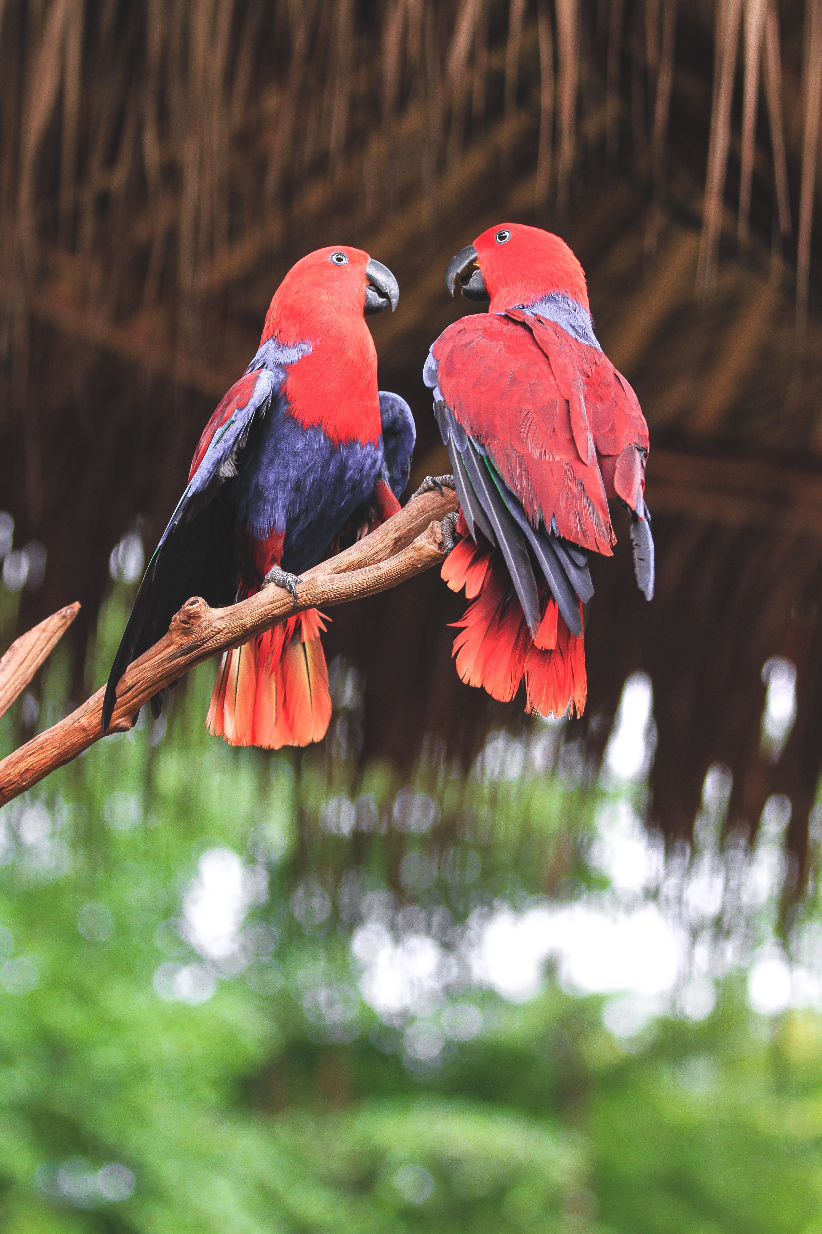 109324 download wallpaper Birds, Animals, Parrots, Branch screensavers and pictures for free