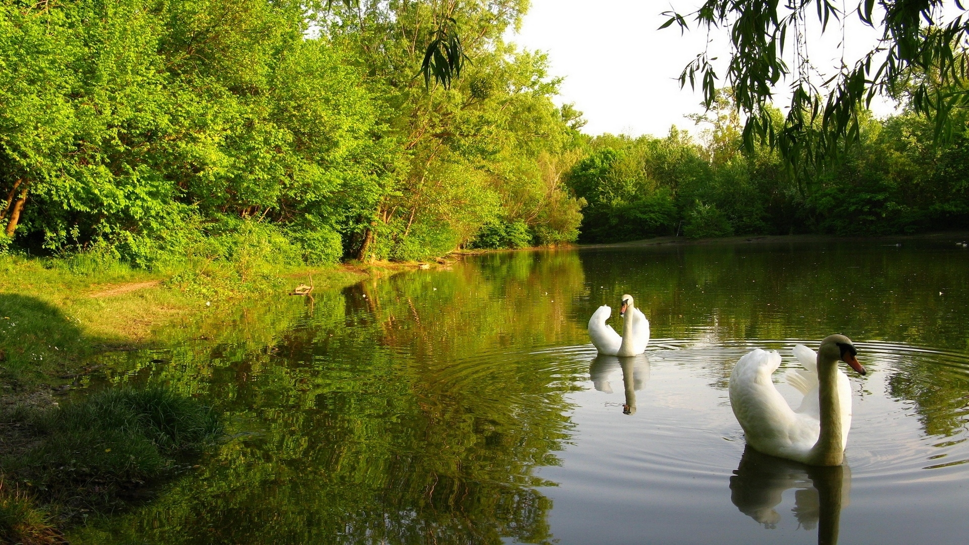 24922 download wallpaper Animals, Birds, Rivers, Swans screensavers and pictures for free