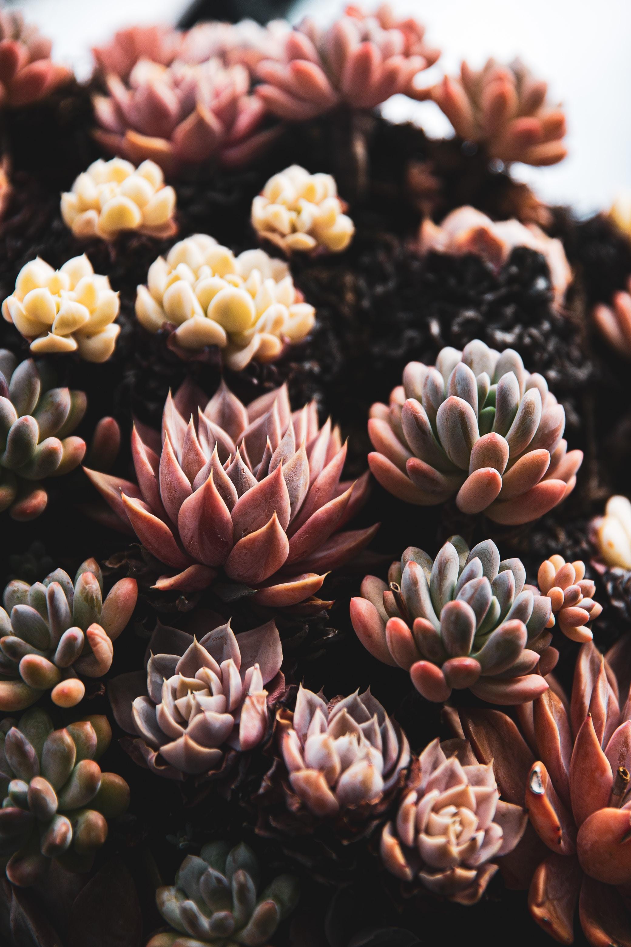 141772 скачать обои Растения, Цветы, Крупный План, Суккуленты - заставки и картинки бесплатно