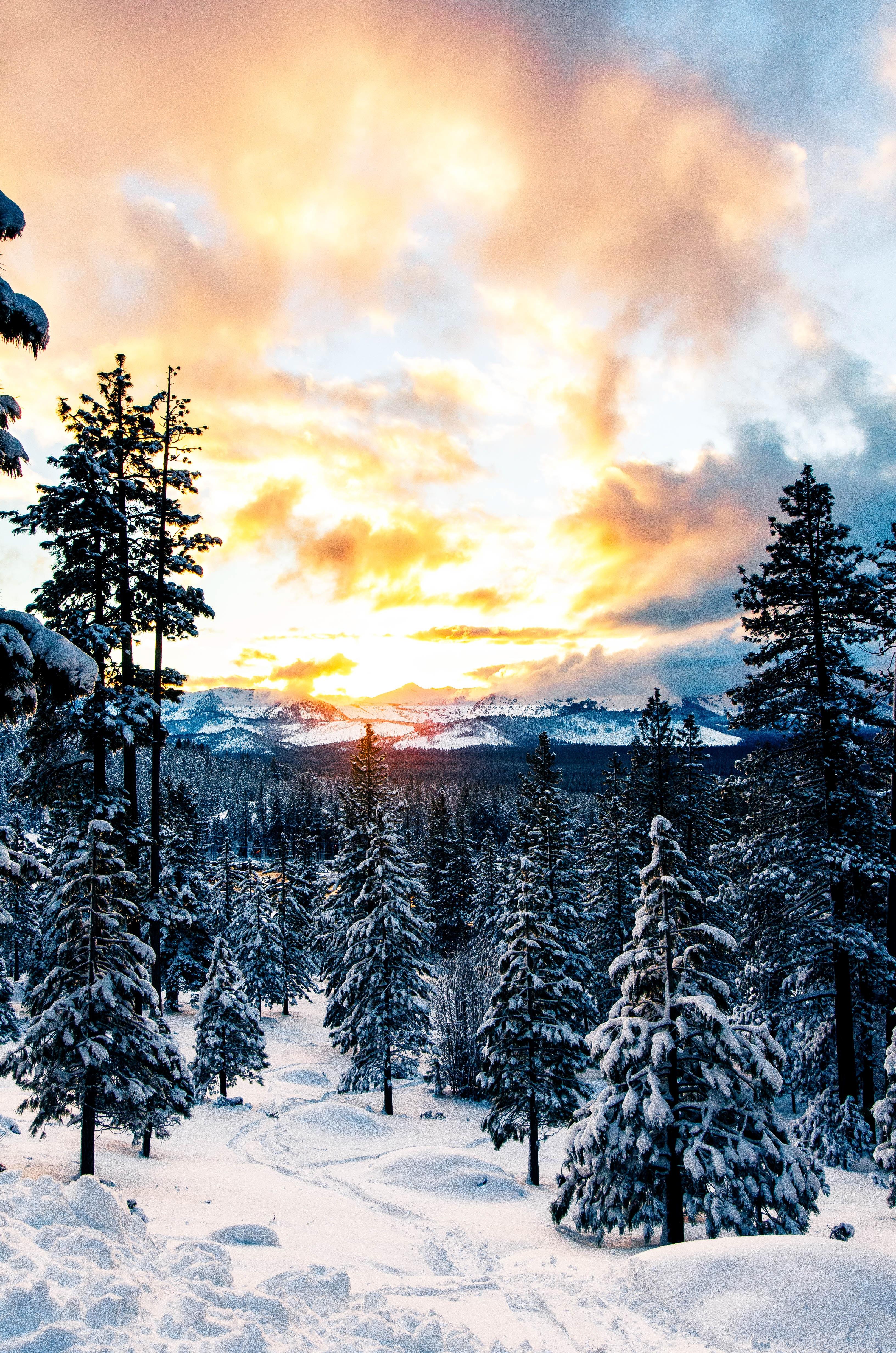 100125 Заставки и Обои Зима на телефон. Скачать Природа, Лес, Зима, Снег, Горы картинки бесплатно