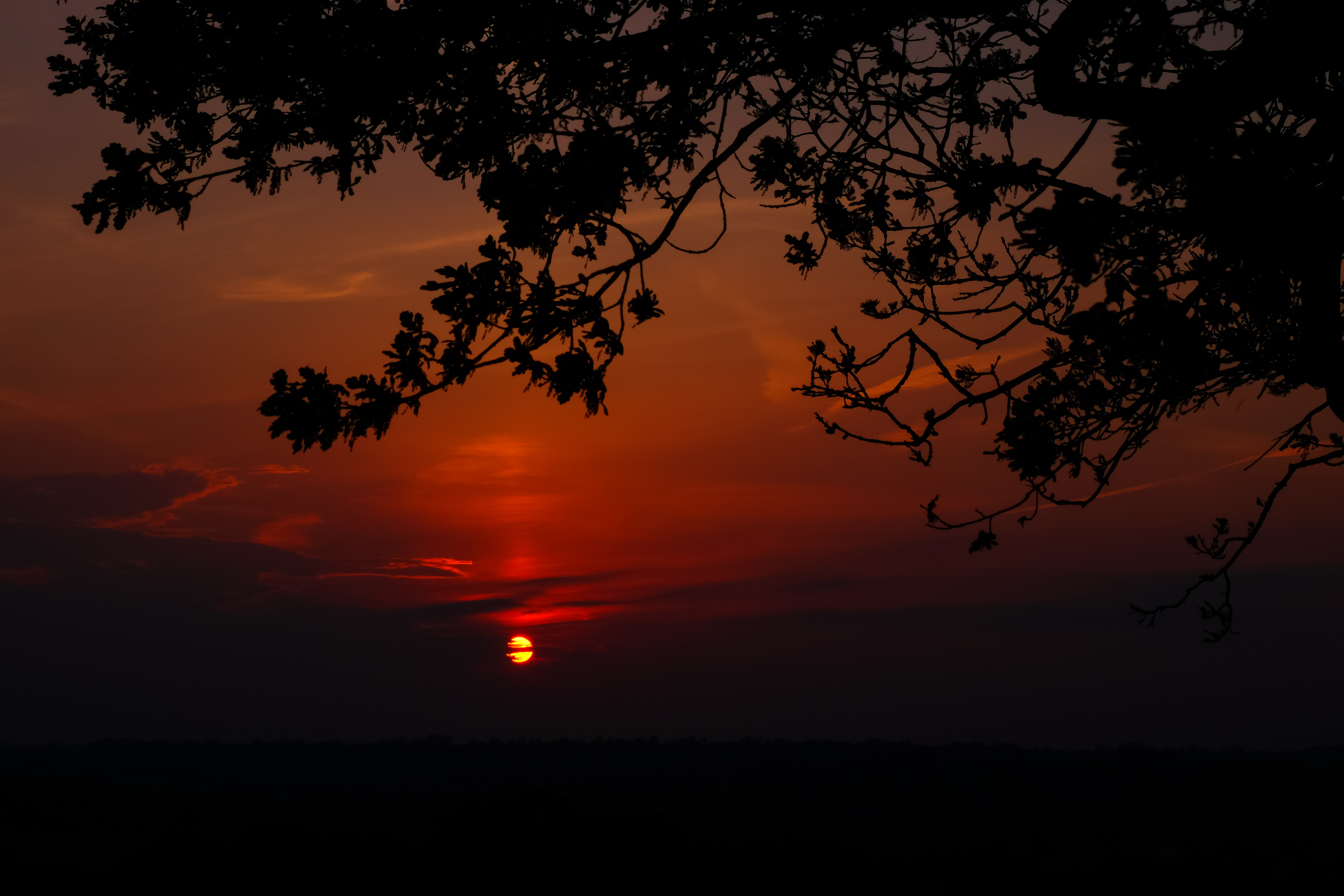 130463 download wallpaper Nature, Sunset, Horizon, Branch, Cloud screensavers and pictures for free