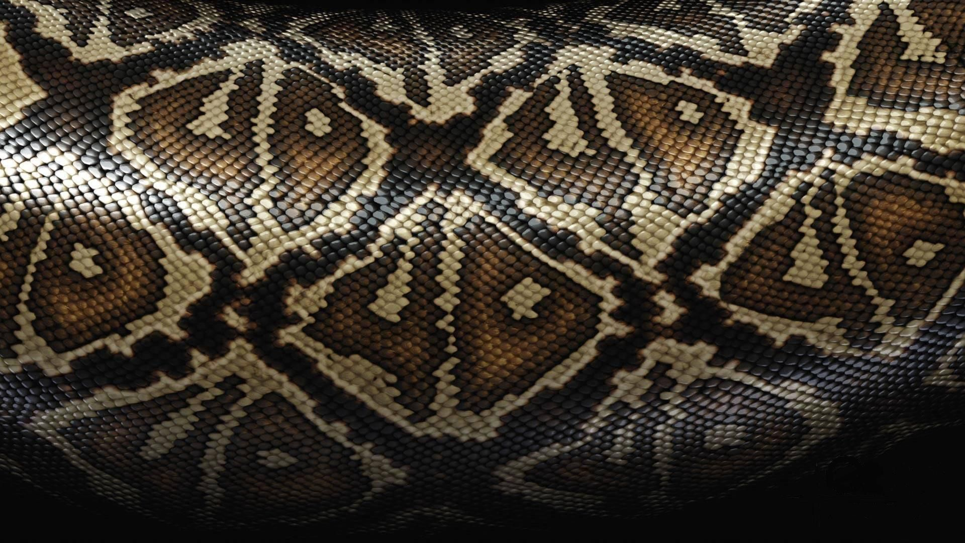 55024 Screensavers and Wallpapers Snake for phone. Download Patterns, Texture, Textures, Snake, Scales, Scale pictures for free