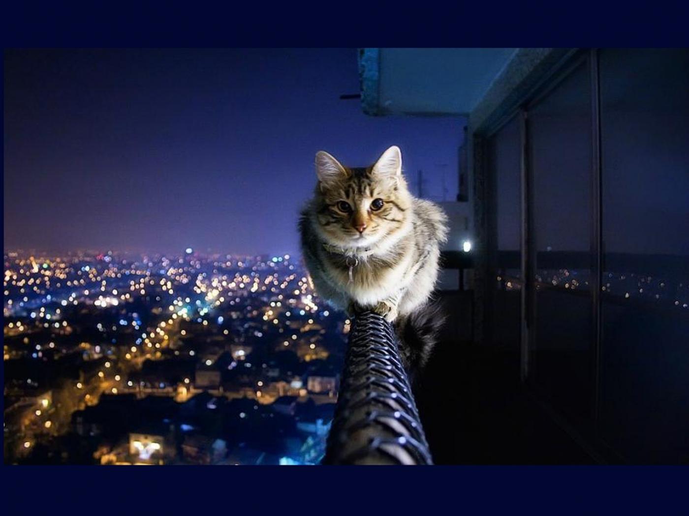 46361 скачать обои Животные, Кошки (Коты, Котики) - заставки и картинки бесплатно