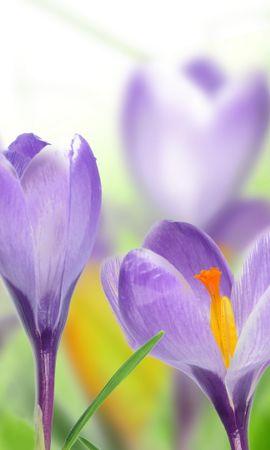 47179 baixar papel de parede Plantas, Flores - protetores de tela e imagens gratuitamente