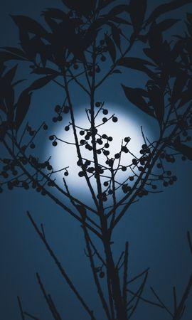 136896 télécharger le fond d'écran Sombre, Lune, Silhouette, Branches, Nuit, Baies - économiseurs d'écran et images gratuitement