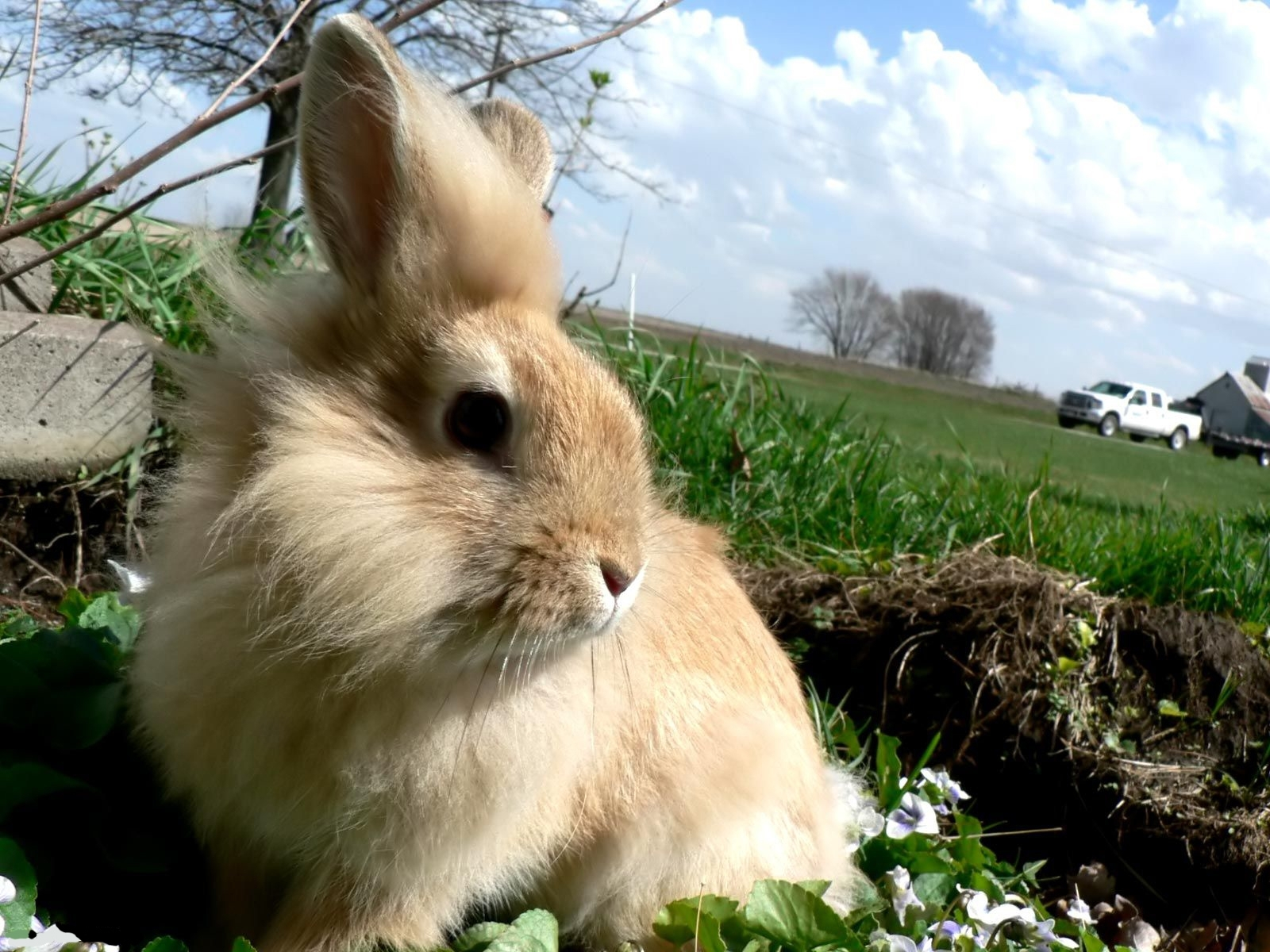 7507 download wallpaper Animals, Rabbits screensavers and pictures for free