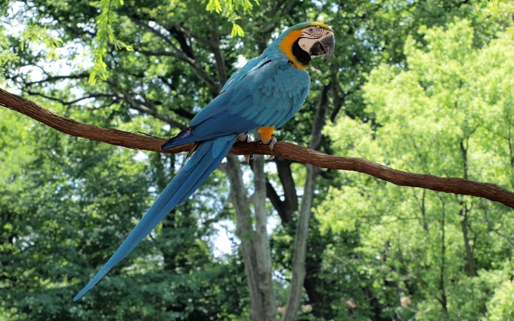 145645 download wallpaper Animals, Parrots, Macaw, Bird, Branch, Tail, Sit, Color, Forest screensavers and pictures for free