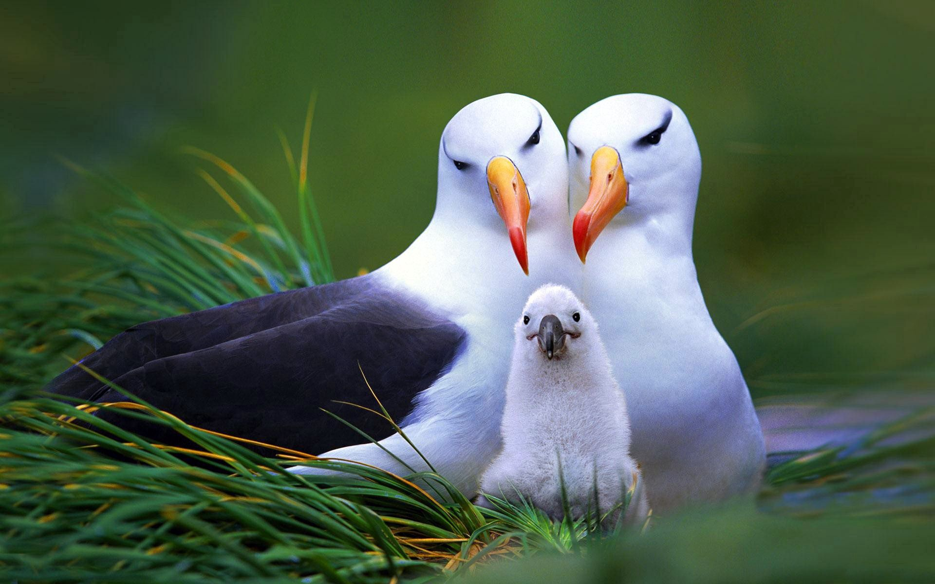 87872 Screensavers and Wallpapers Birds for phone. Download Animals, Nest, Chick, Nestling, Beak, Birds pictures for free