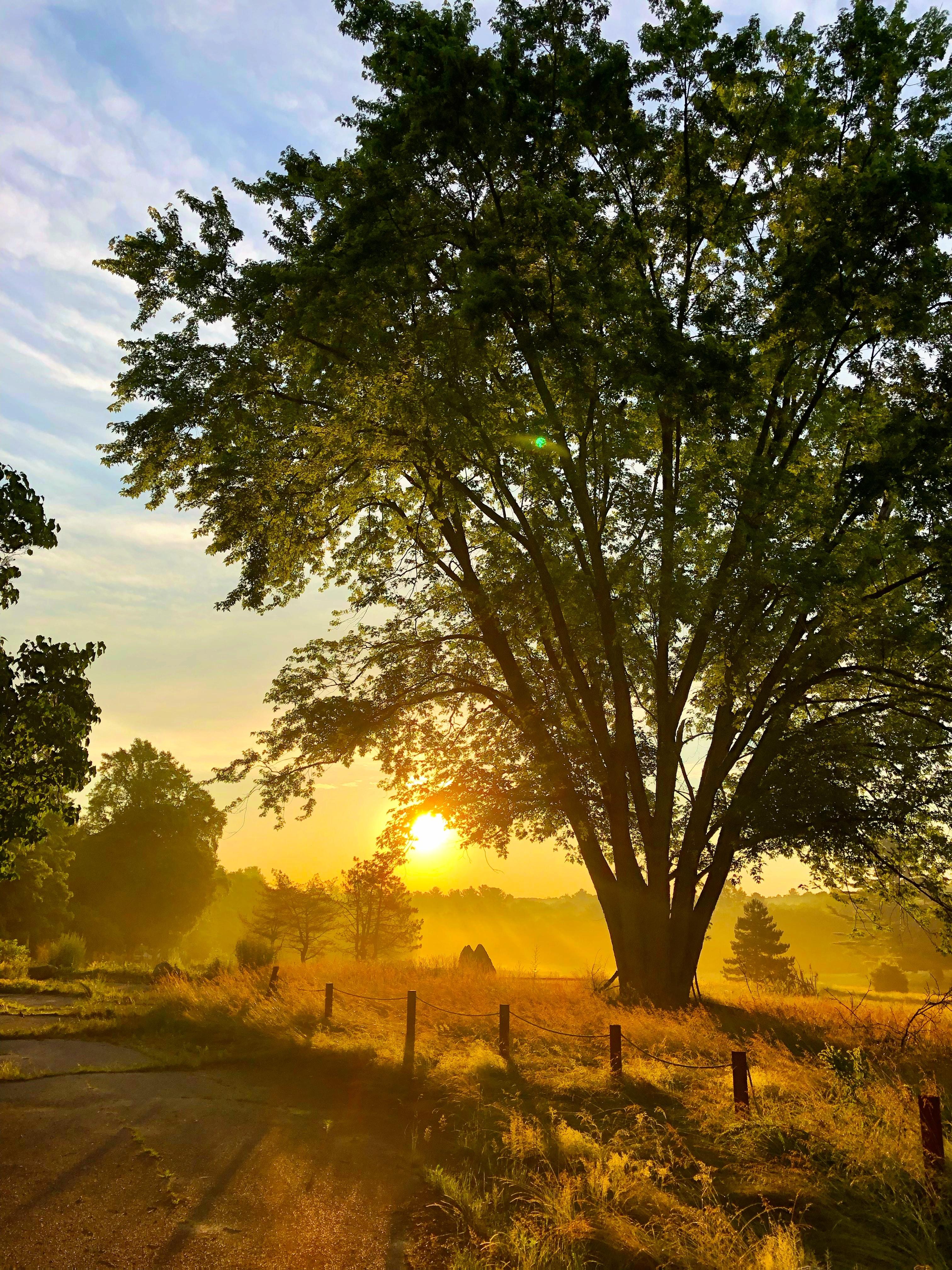 68853 Hintergrundbild herunterladen Pflanzen, Natur, Sun, Holz, Balken, Strahlen, Baum - Bildschirmschoner und Bilder kostenlos