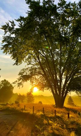 68853 download wallpaper Nature, Wood, Tree, Plants, Beams, Rays, Sun screensavers and pictures for free