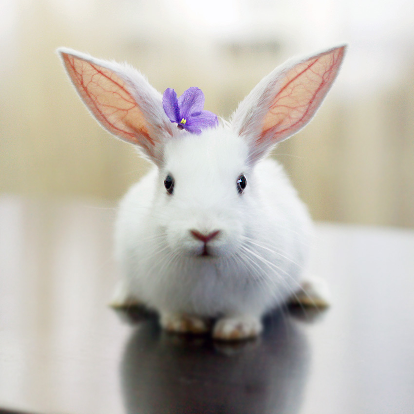 14844 download wallpaper Animals, Rodents, Rabbits screensavers and pictures for free
