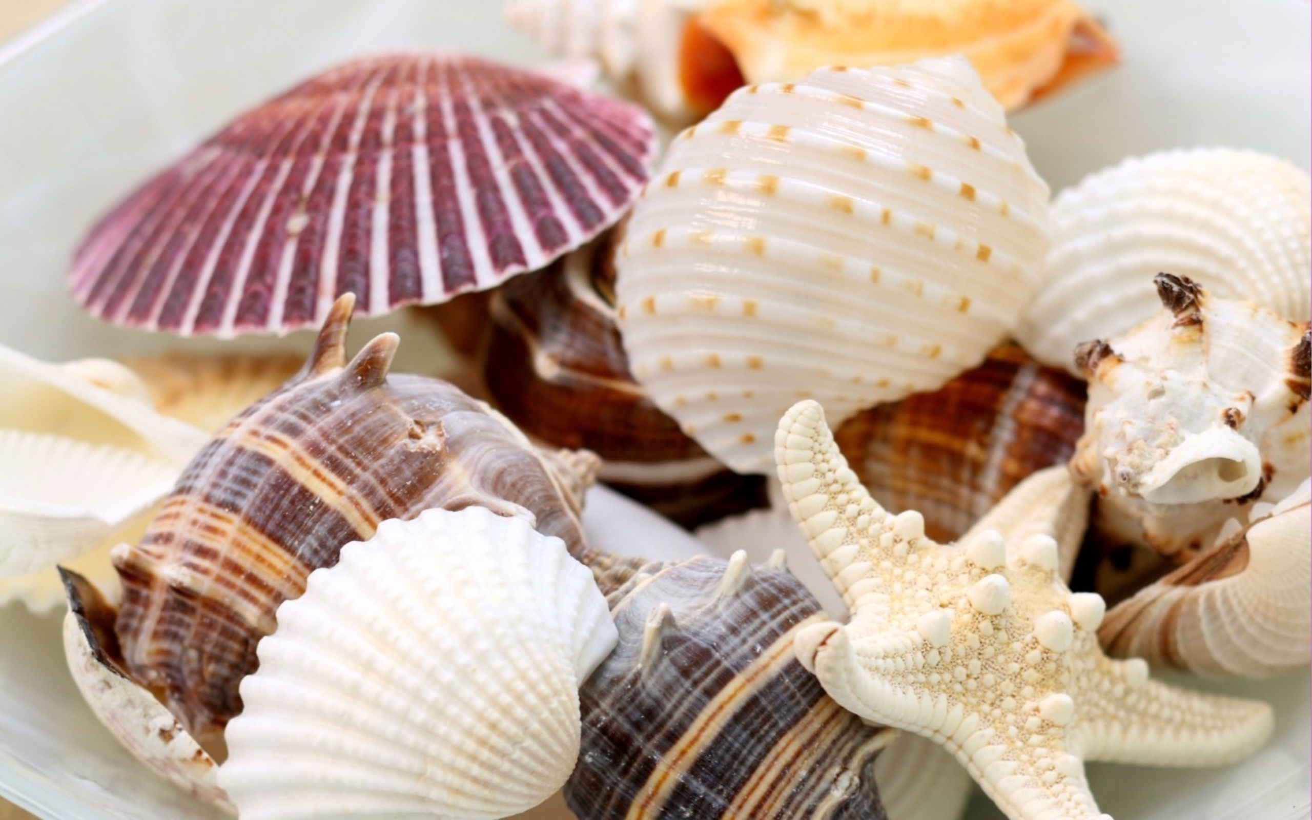 20598 download wallpaper Background, Shells, Starfish screensavers and pictures for free