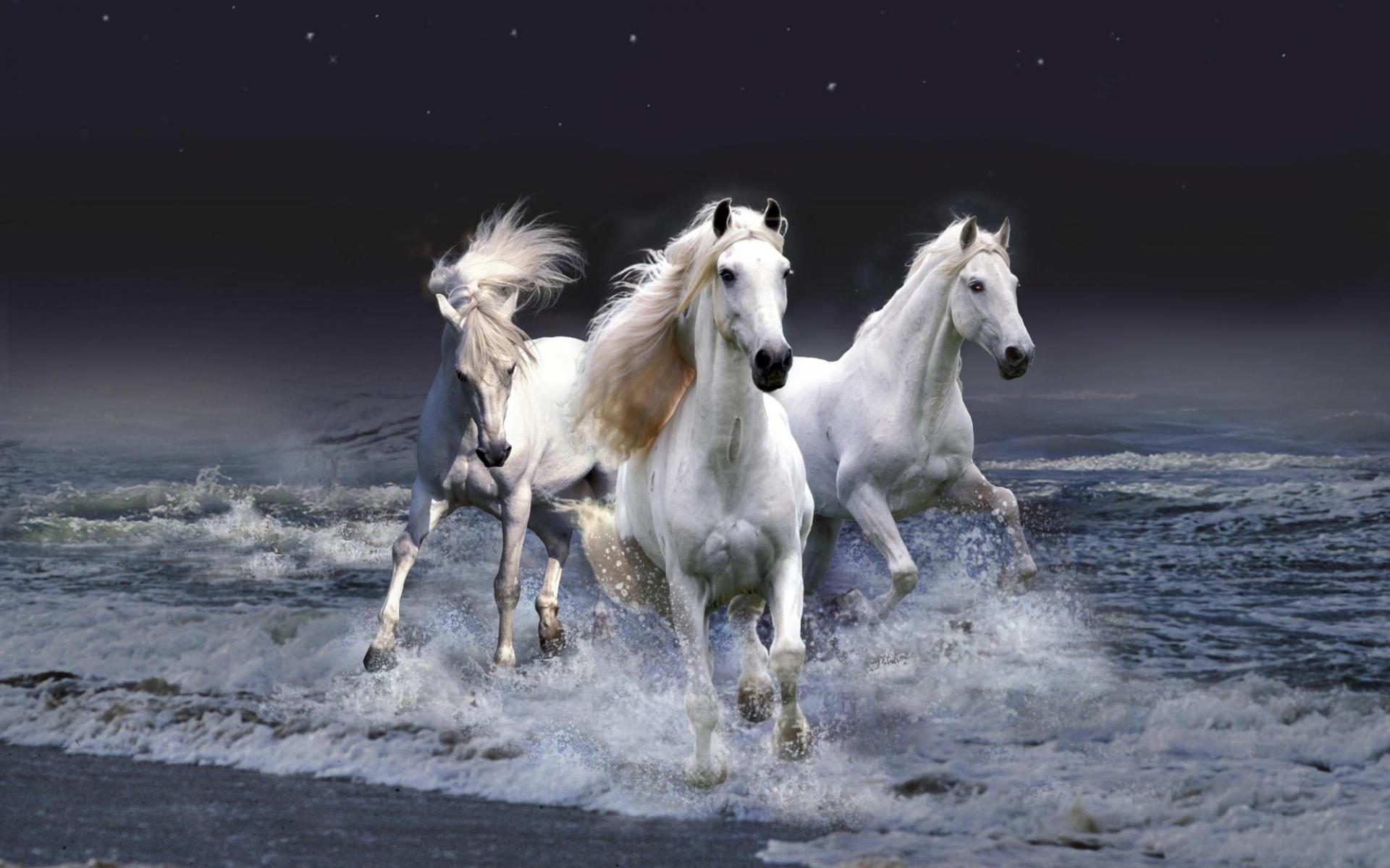 23573 скачать обои Животные, Лошади - заставки и картинки бесплатно