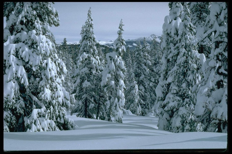 3220 скачать обои Пейзаж, Зима, Деревья, Елки - заставки и картинки бесплатно