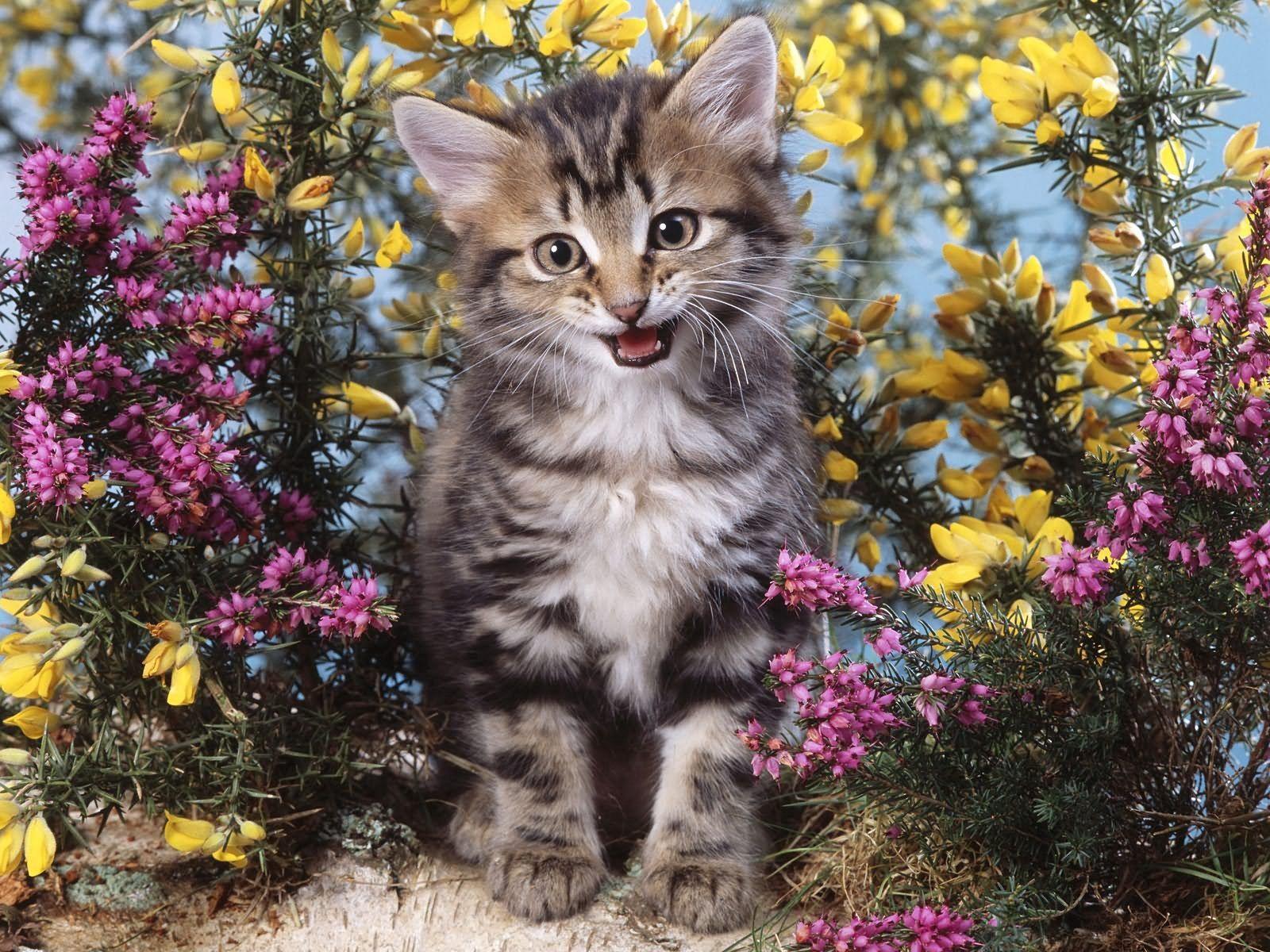 123069 скачать обои Животные, Котенок, Крик, Цветы - заставки и картинки бесплатно