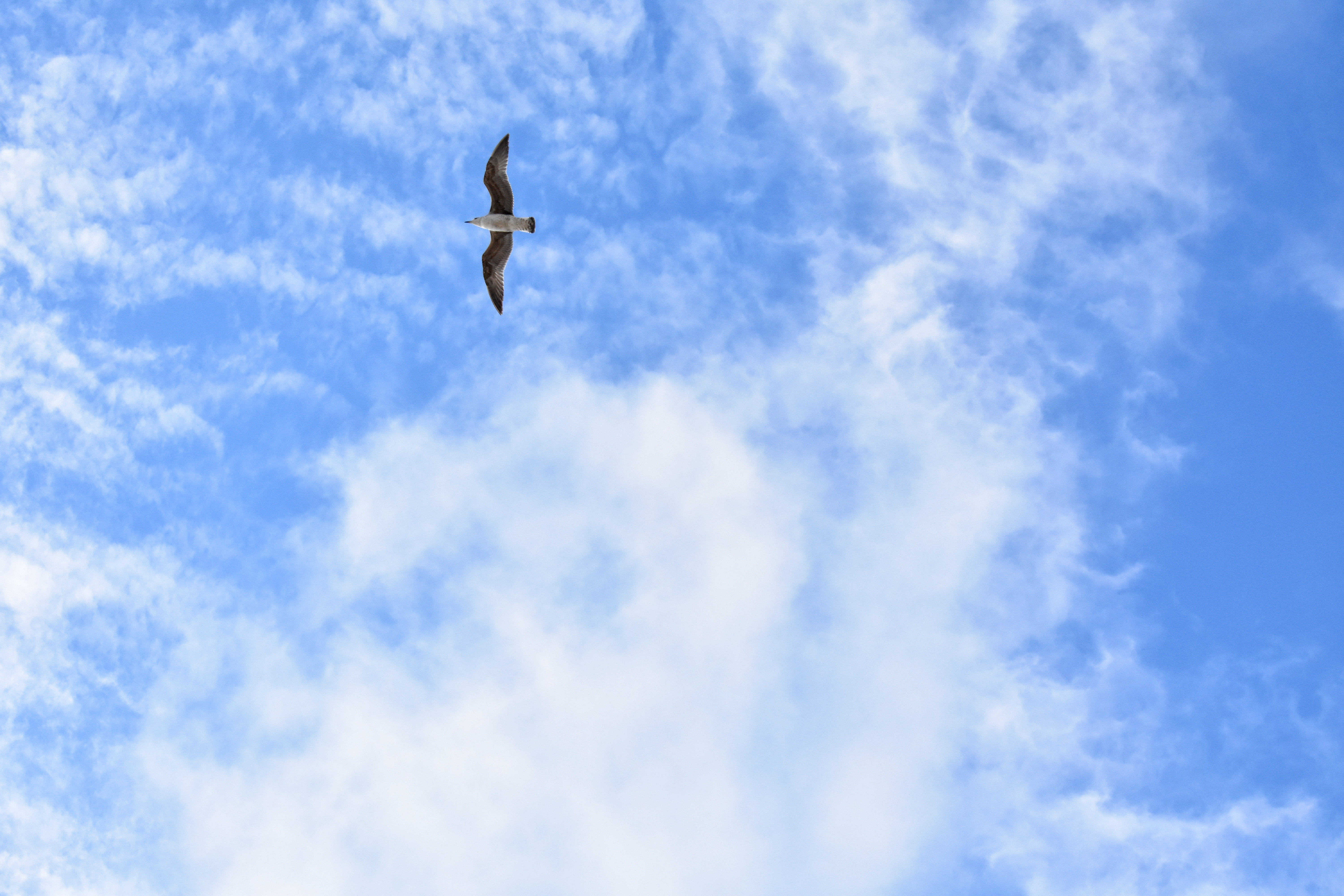 131891 download wallpaper Minimalism, Gull, Seagull, Flight screensavers and pictures for free