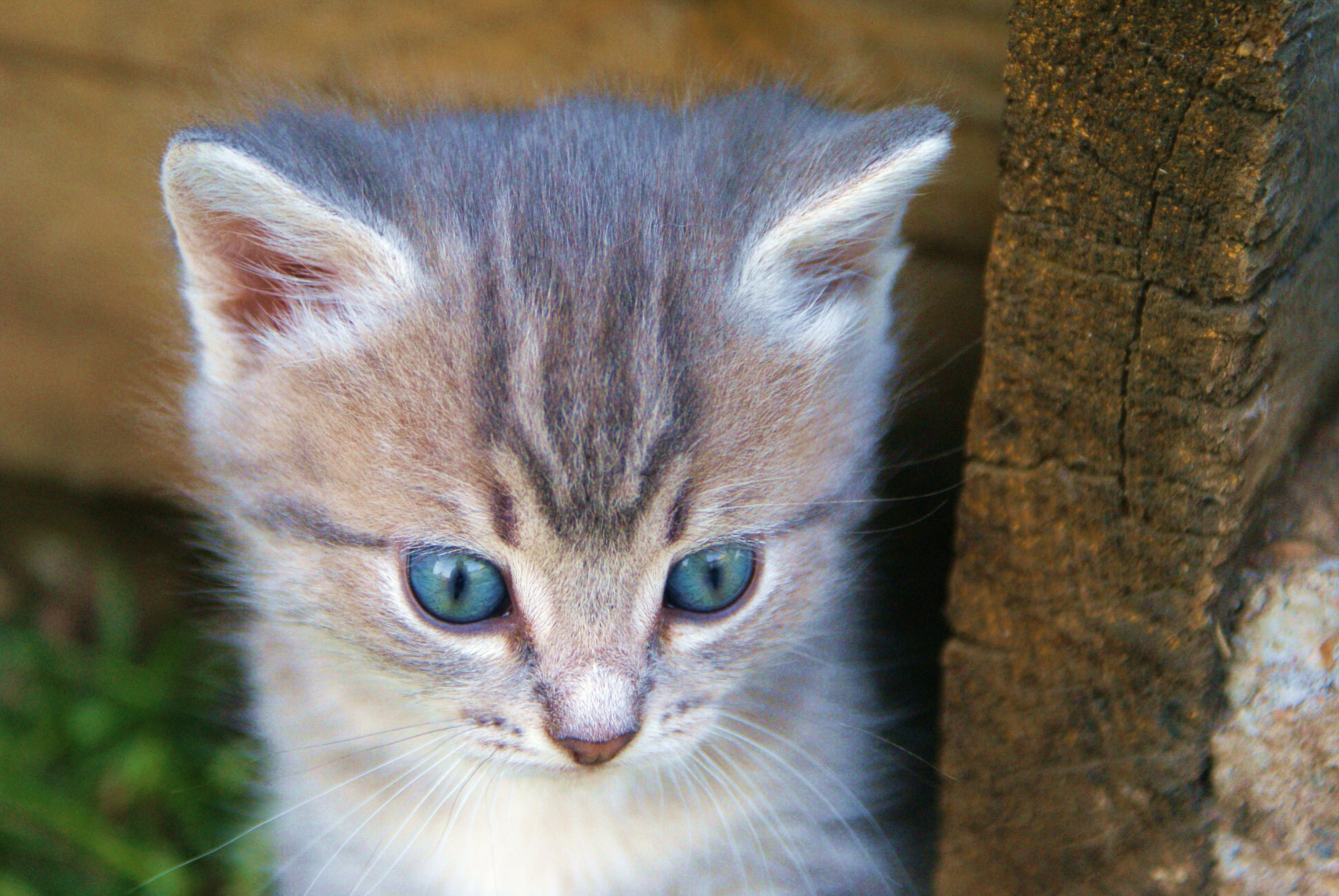 151246 download wallpaper Animals, Kitty, Kitten, Muzzle, Nice, Sweetheart screensavers and pictures for free
