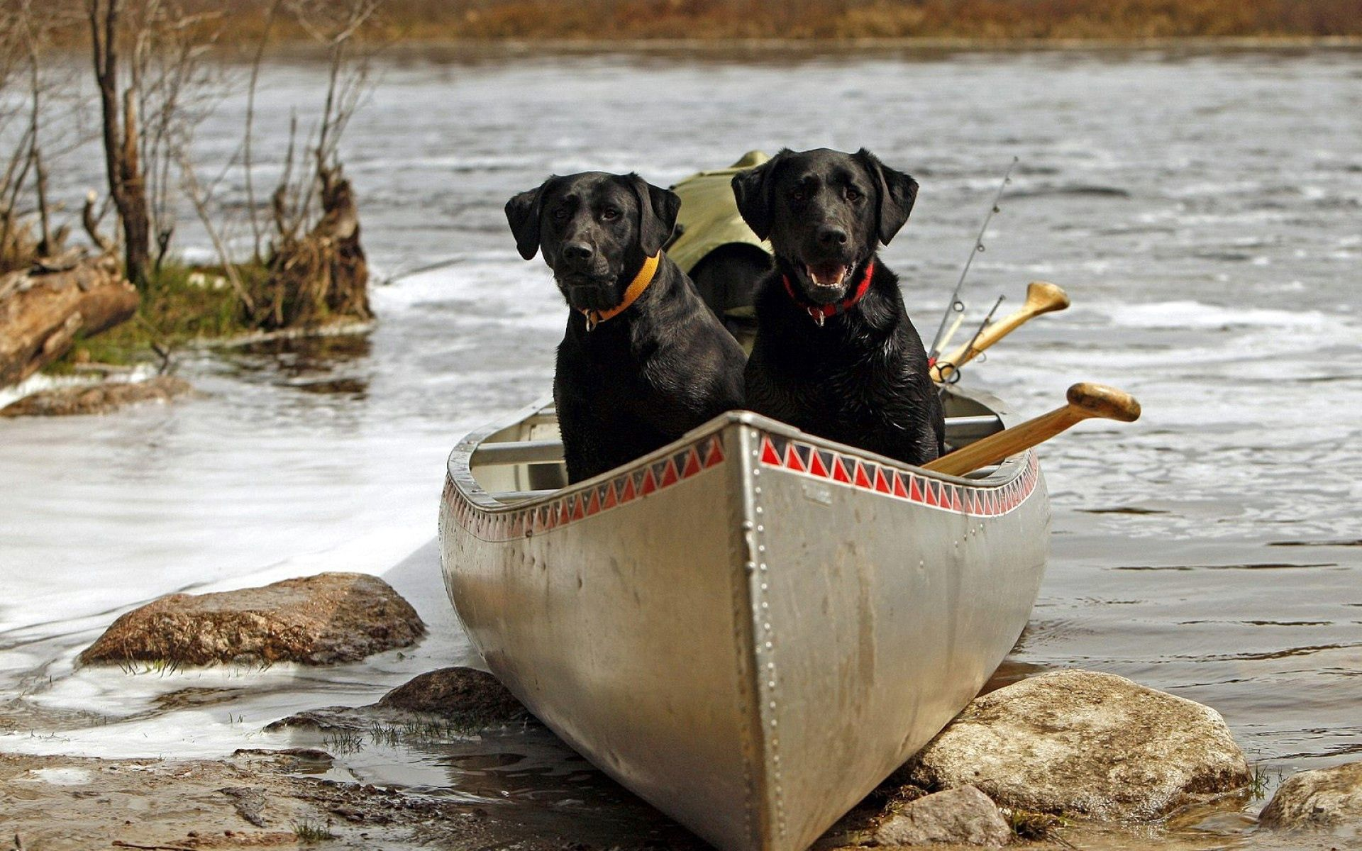 70856 download wallpaper Animals, Dogs, Couple, Pair, Boat, Stones, Rivers screensavers and pictures for free
