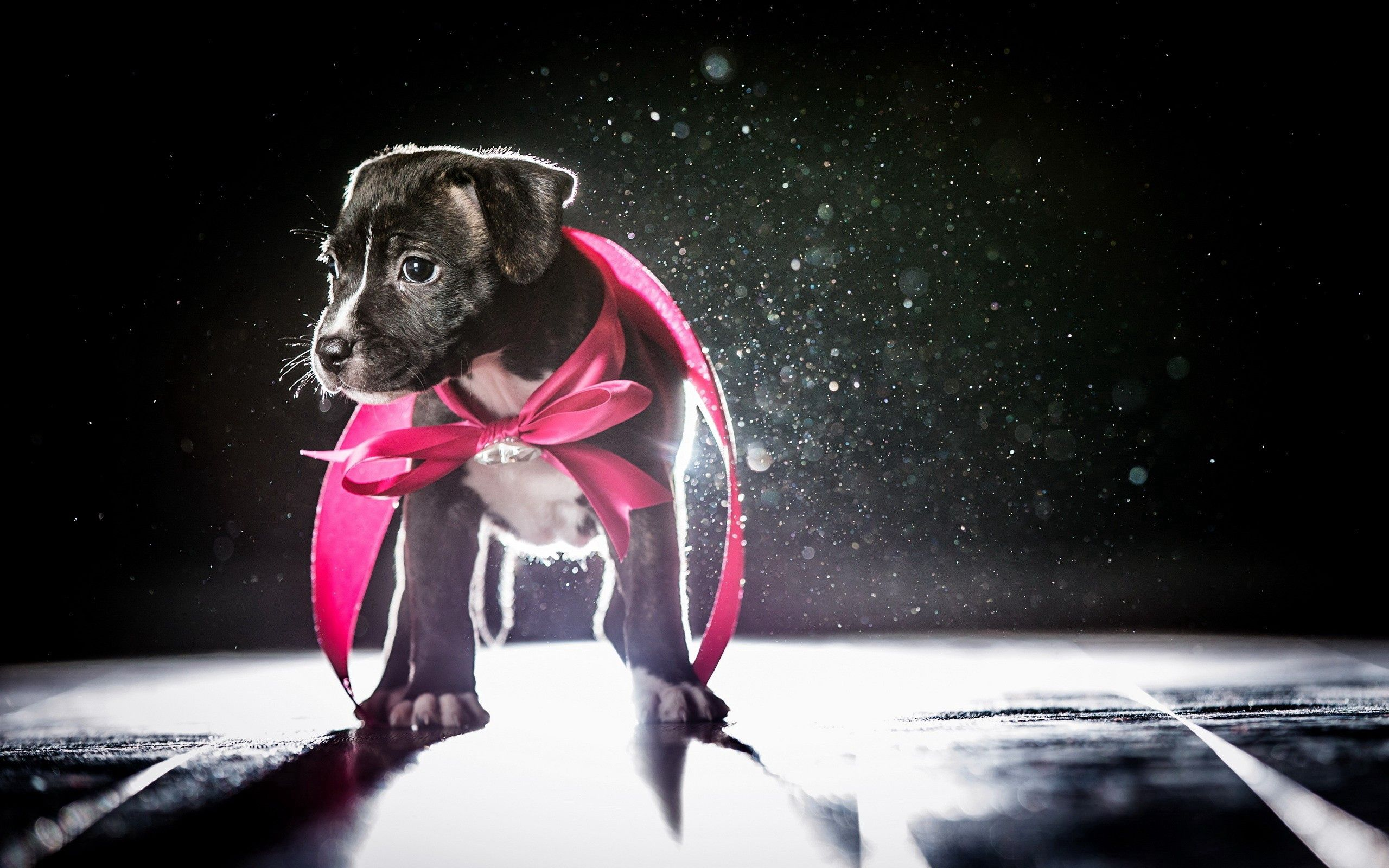 63454 download wallpaper Animals, Dog, Puppy, Bow, Shadow, Shine, Light screensavers and pictures for free