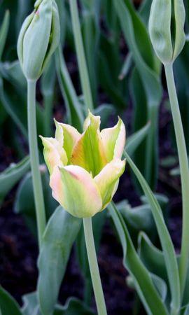 46168 descargar fondo de pantalla Plantas, Flores: protectores de pantalla e imágenes gratis