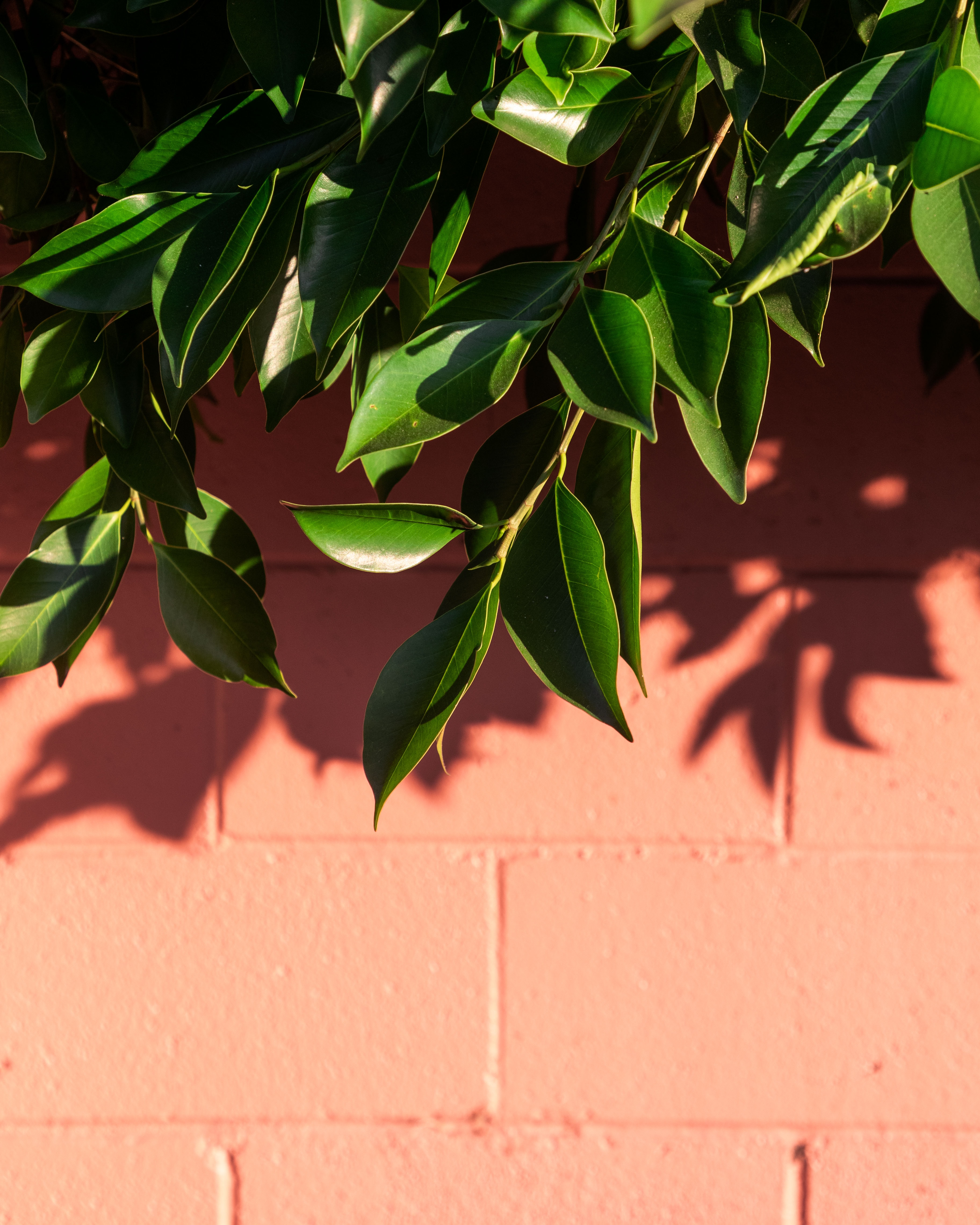 118542 download wallpaper Wall, Leaves, Plant, Macro, Branch, Shadow screensavers and pictures for free
