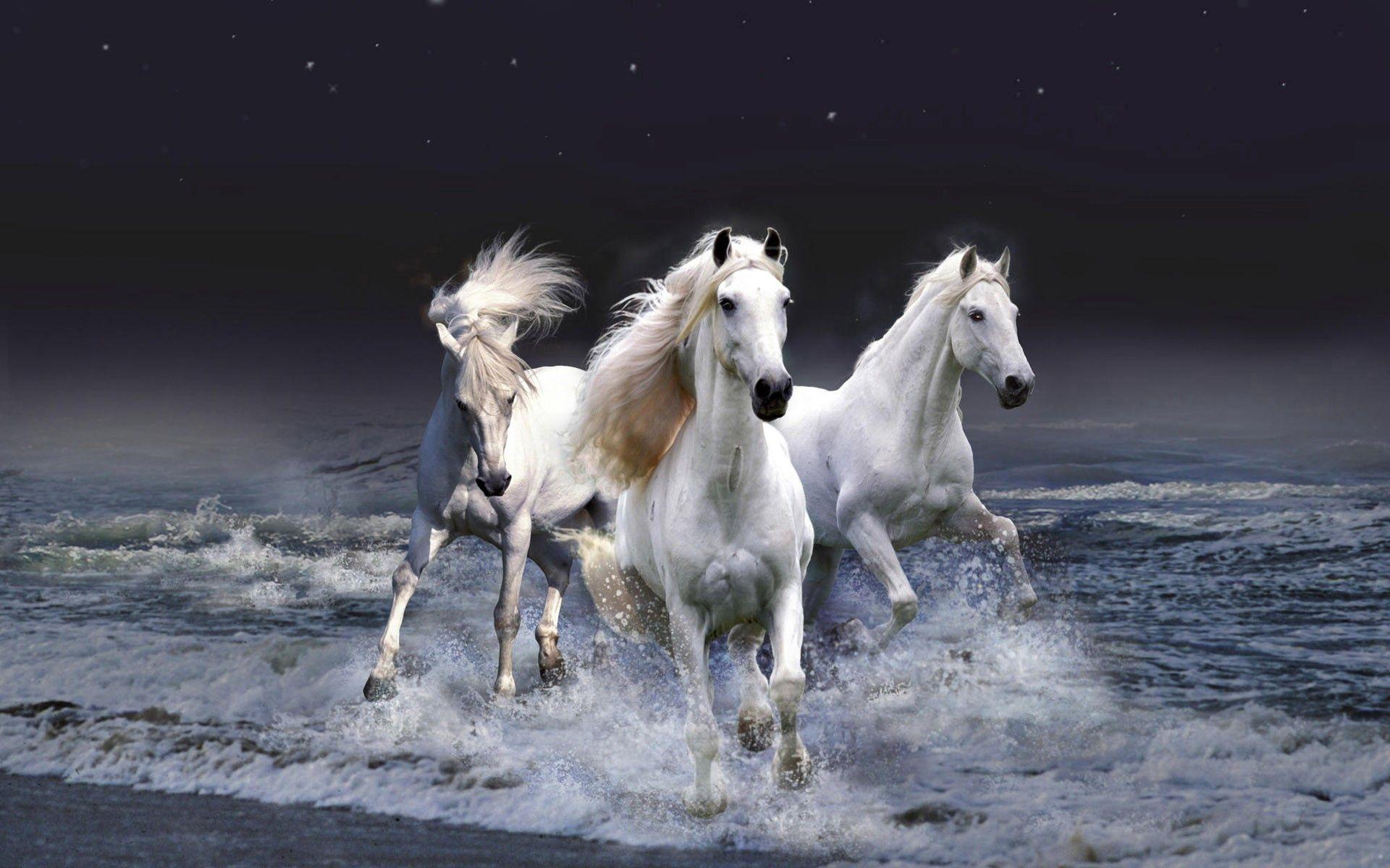 140631 скачать обои Животные, Лошади, Бег, Небо, Волны - заставки и картинки бесплатно