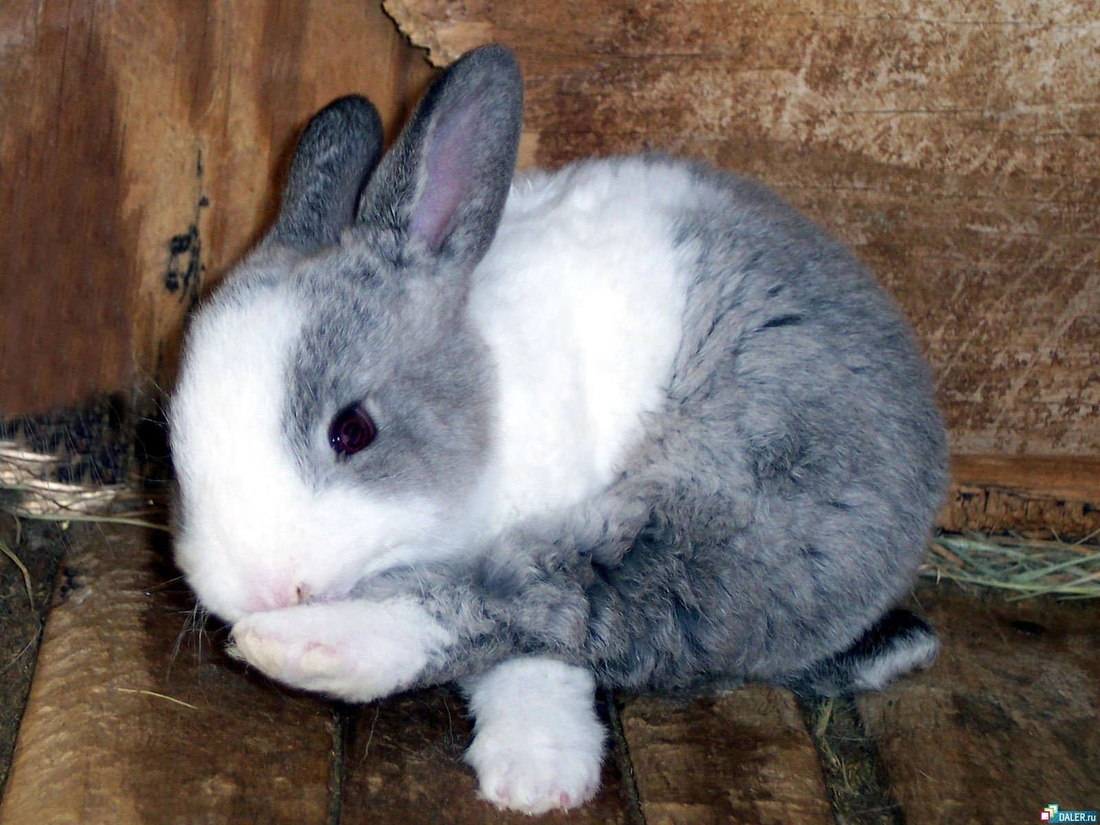 8183 download wallpaper Animals, Rabbits screensavers and pictures for free