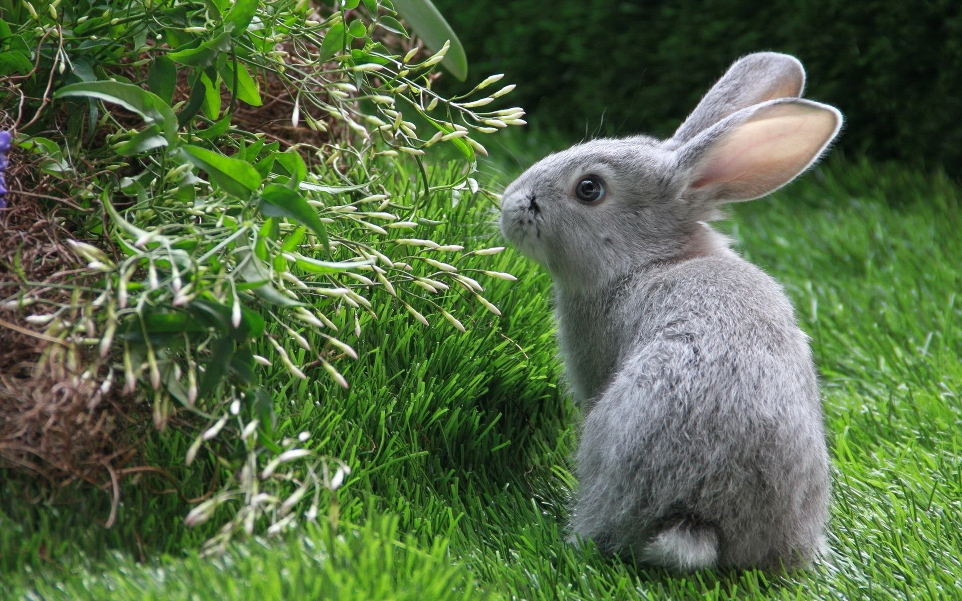 43420 download wallpaper Animals, Rabbits screensavers and pictures for free