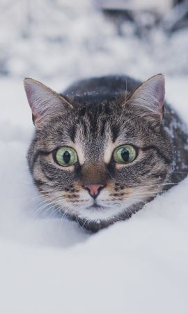87963 Screensavers and Wallpapers Funny for phone. Download Animals, Cat, Pet, Funny, Sight, Opinion, Snow, Winter pictures for free