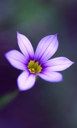 46001 descargar fondo de pantalla Plantas, Flores: protectores de pantalla e imágenes gratis