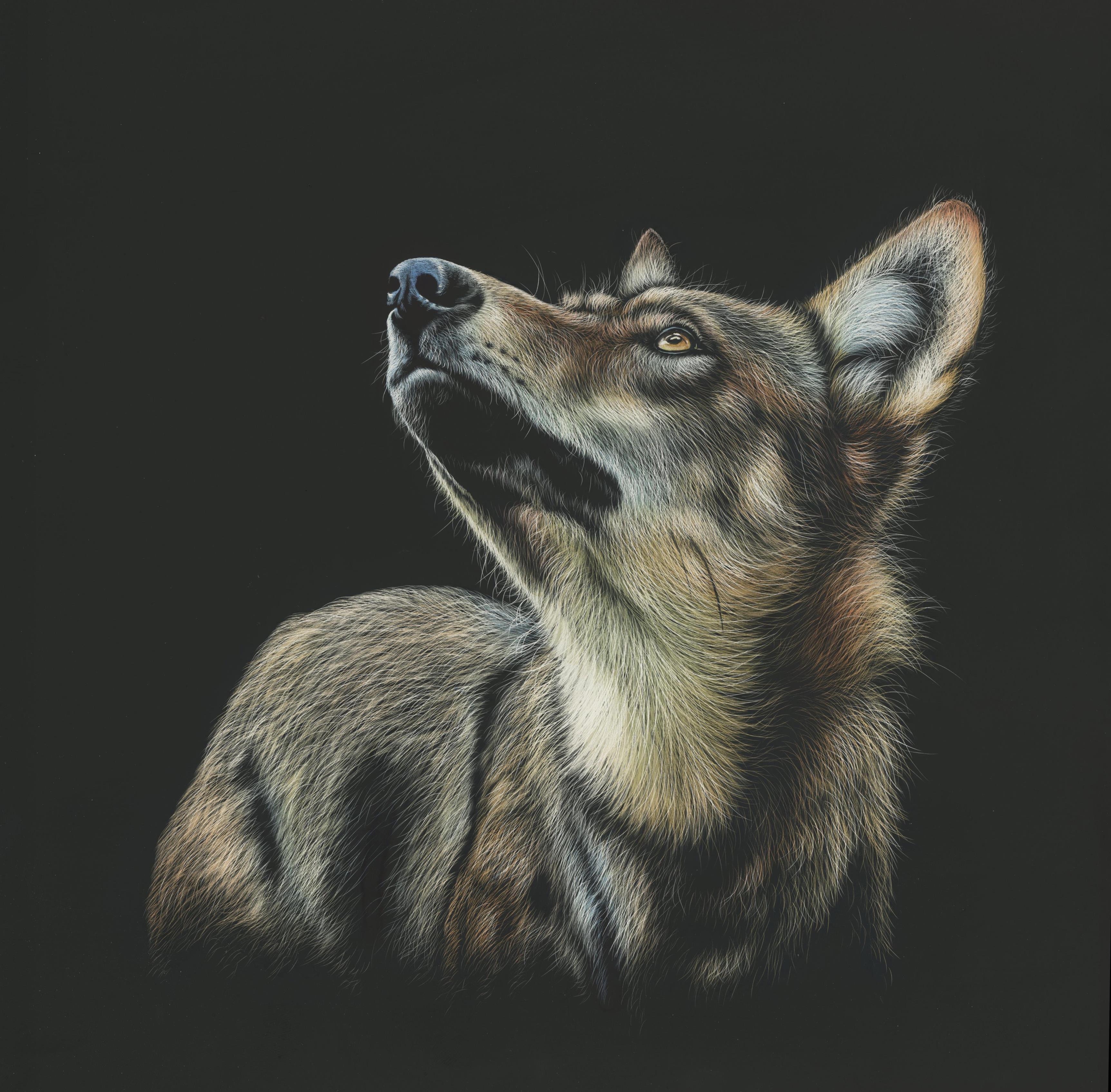65548 baixar papel de parede Desenho, Arte, Escuro, Foto, Lobo, Visão, Opinião - protetores de tela e imagens gratuitamente