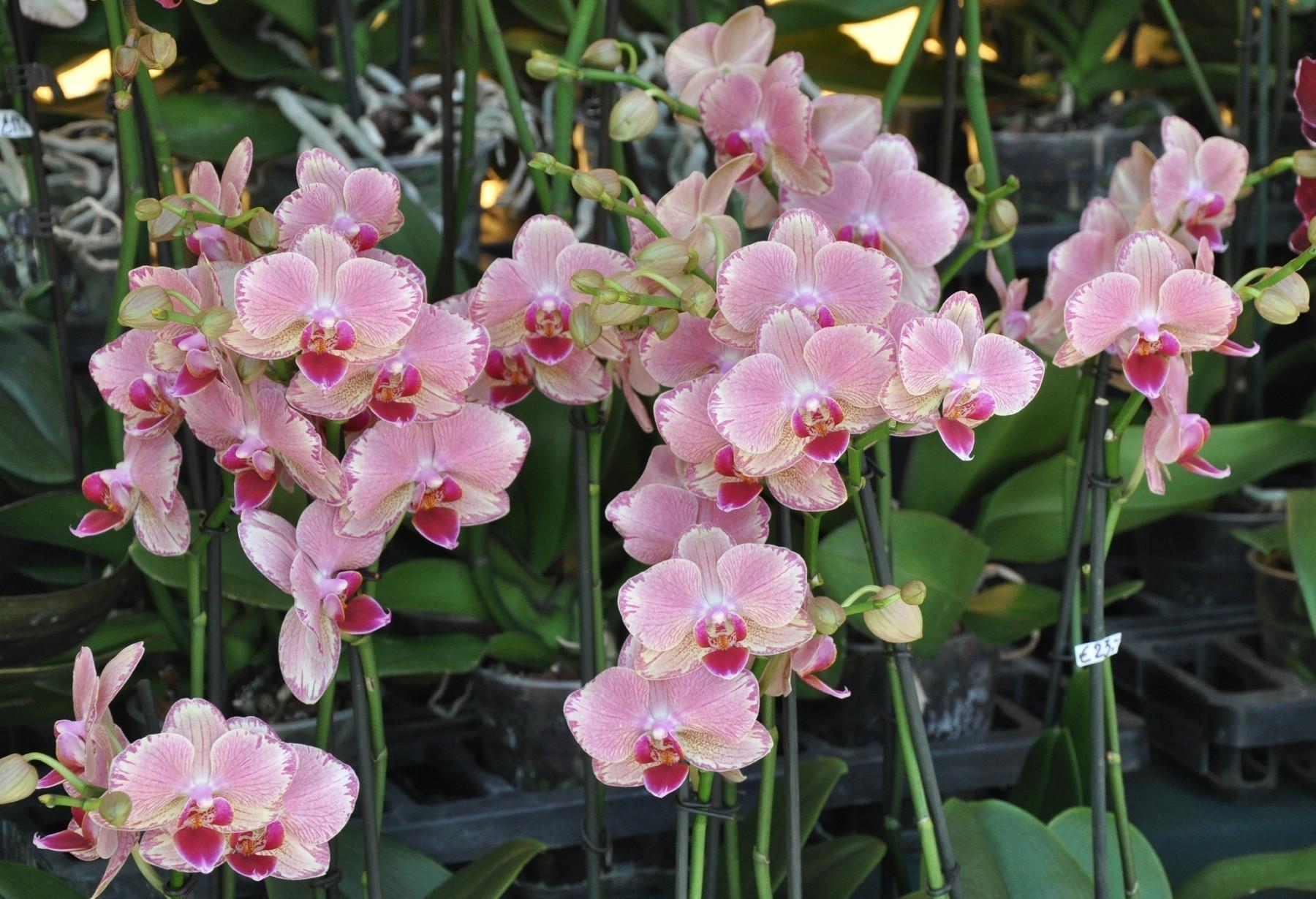 Скачать обои Орхидеи на телефон бесплатно