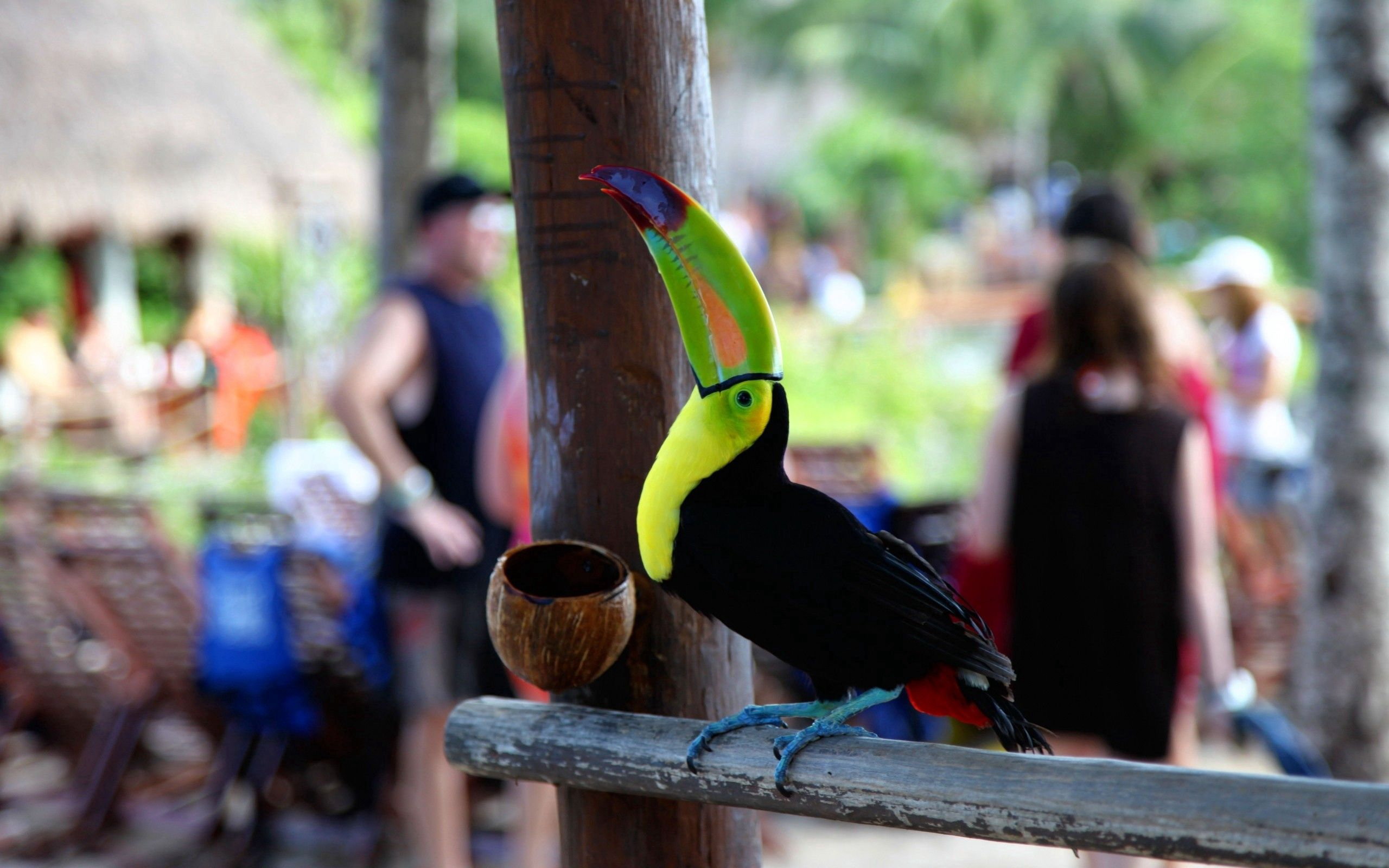 54572 download wallpaper Animals, Toucan, Bird, Color, Beak, People screensavers and pictures for free