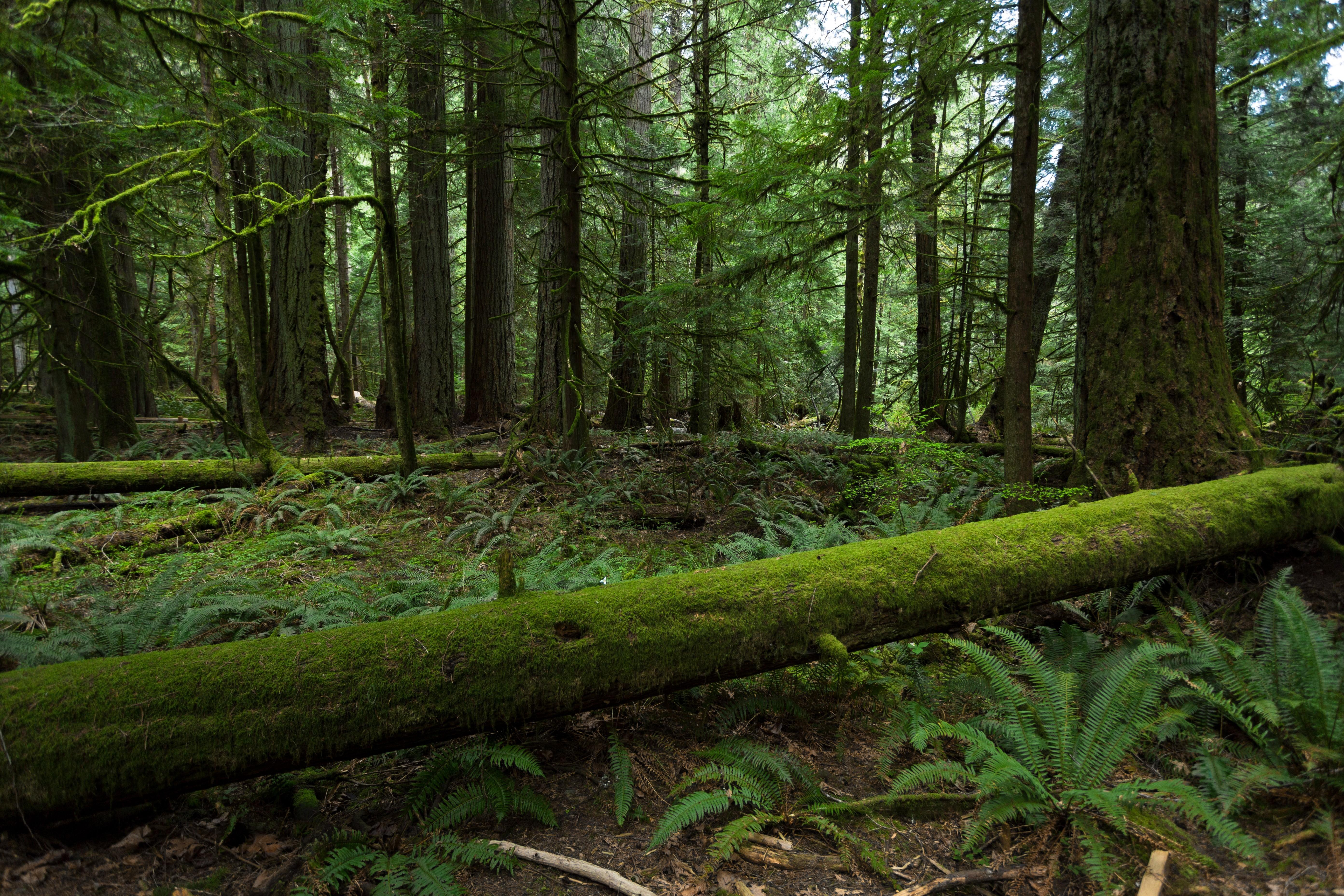 154847 Hintergrundbild herunterladen Bäume, Natur, Wald - Bildschirmschoner und Bilder kostenlos