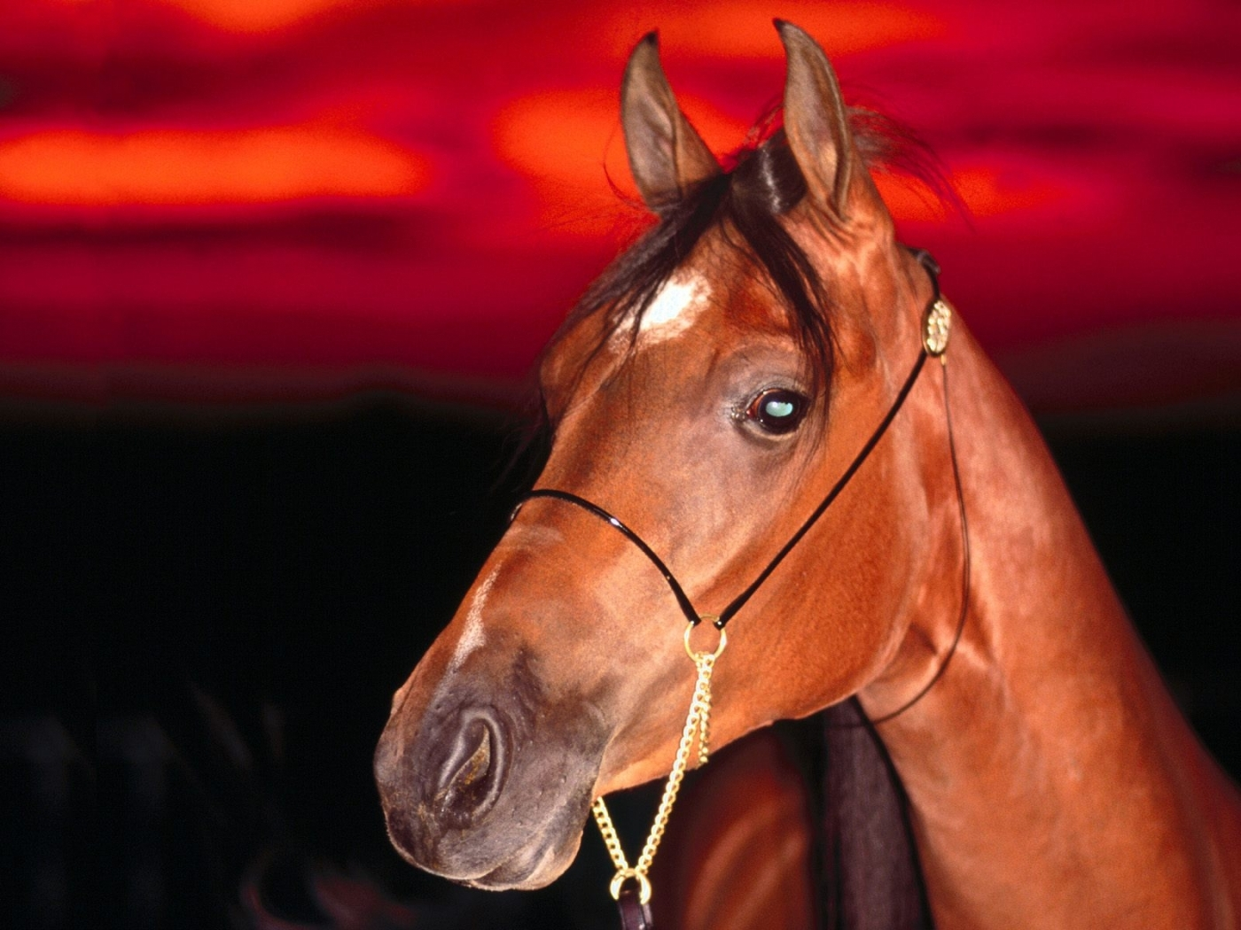 49015 скачать обои Животные, Лошади - заставки и картинки бесплатно