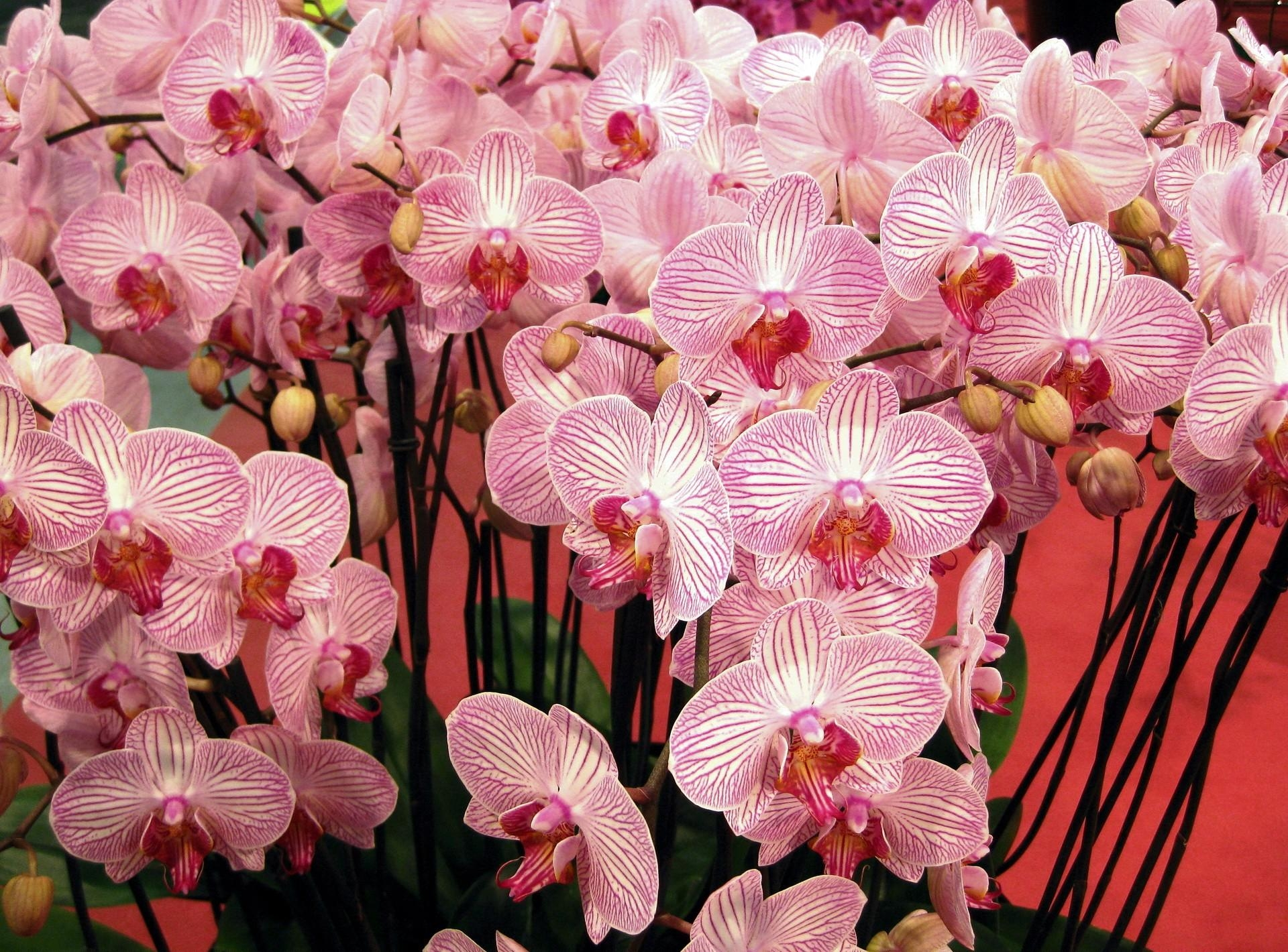 130567 download wallpaper Flowers, Orchids, Branches, Handsomely, It's Beautiful, Bouquet screensavers and pictures for free