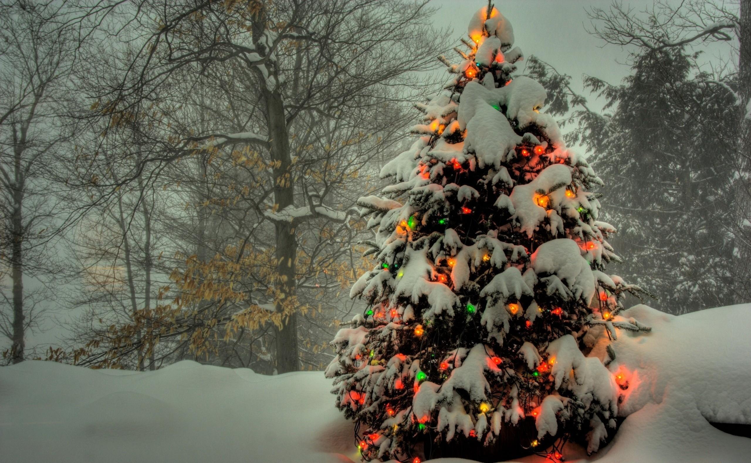 149927 скачать обои Зима, Снег, Праздник, Деревья, Новый Год, Праздники, Рождество, Елка, Гирлянды - заставки и картинки бесплатно