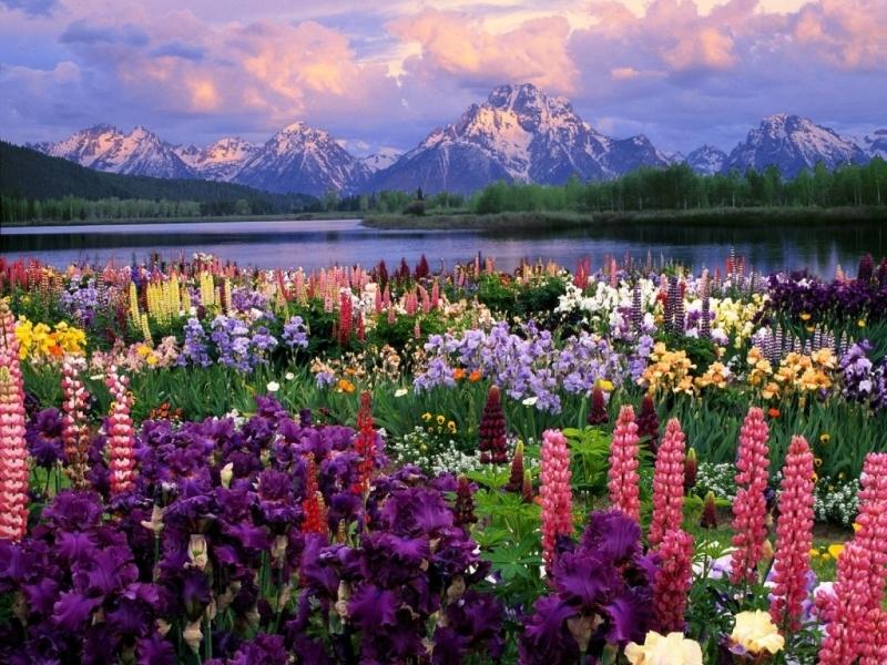Скачать картинку Природа, Цветы, Пейзаж, Растения, Горы в телефон бесплатно.