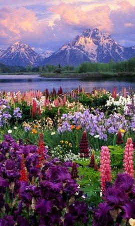 41477 завантажити шпалери Рослини, Пейзаж, Природа, Квіти, Гори - заставки і картинки безкоштовно