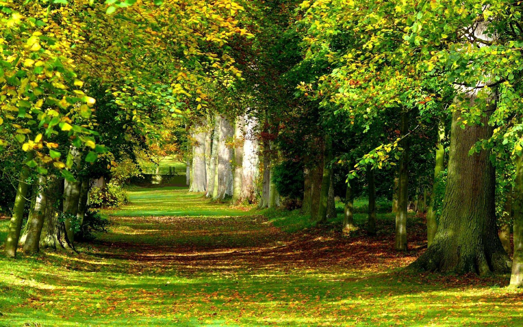 156703壁紙のダウンロード自然, グリーンズ, 菜, 木, 公園, 植生, 夏, 静けさ, 平静, 行, ランク, 草-スクリーンセーバーと写真を無料で