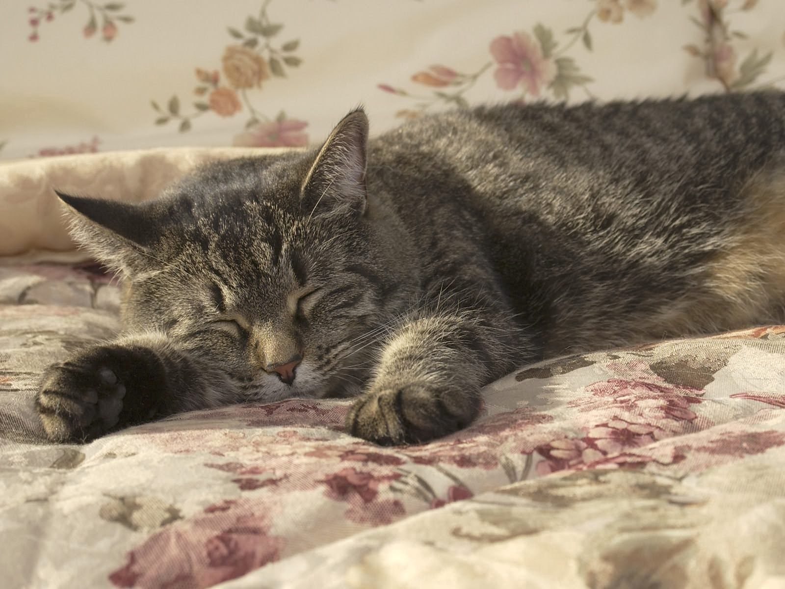 113761 download wallpaper Animals, Cat, Sleep, Dream, Paw, Bed screensavers and pictures for free