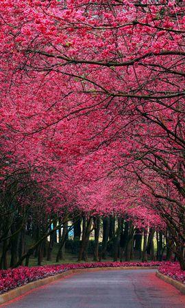 20736 скачать обои Пейзаж, Цветы, Деревья, Дороги - заставки и картинки бесплатно