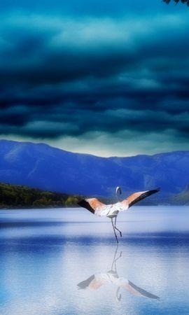 45847 baixar papel de parede Paisagem, Natureza, Aves - protetores de tela e imagens gratuitamente